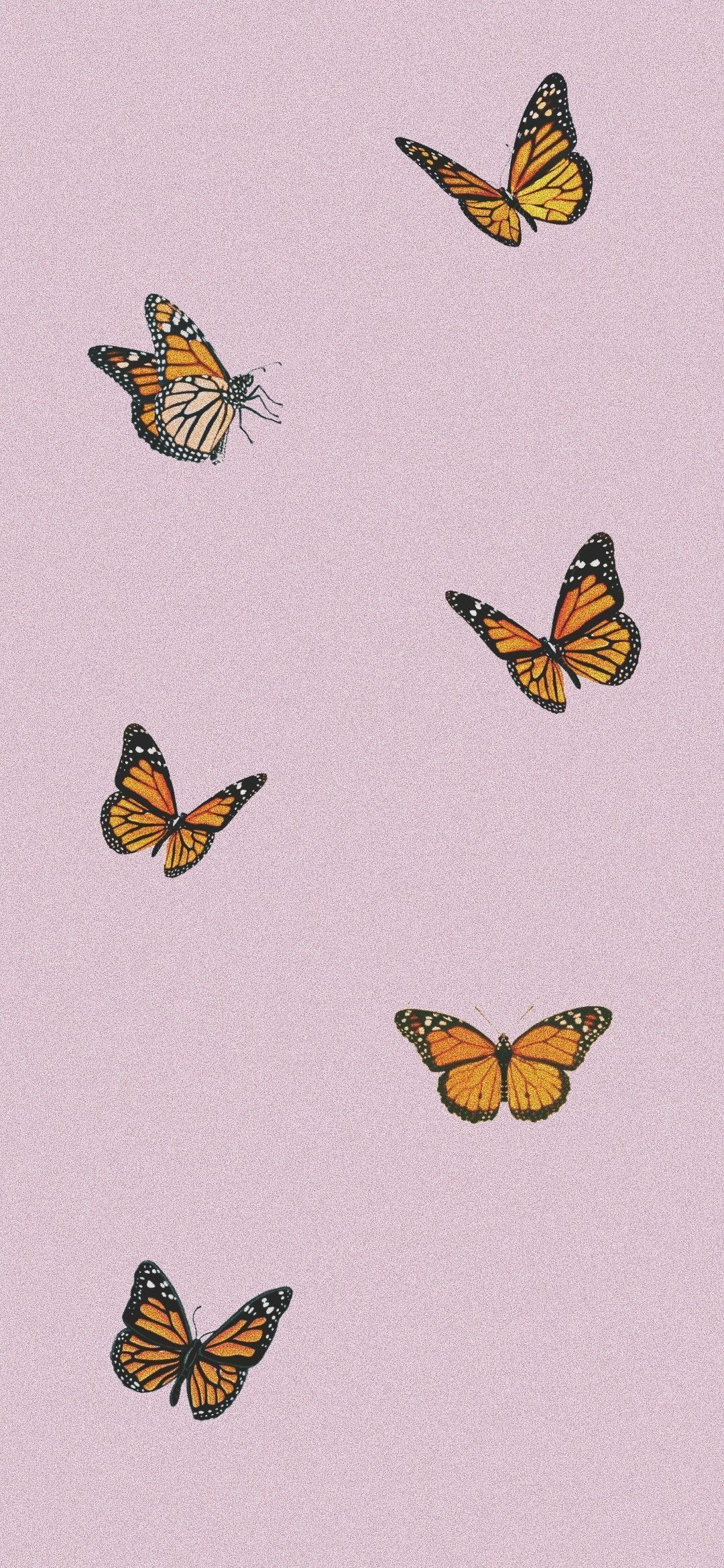 Aesthetic Butterfly iPhone Wallpapers - Wallpaper Cave
