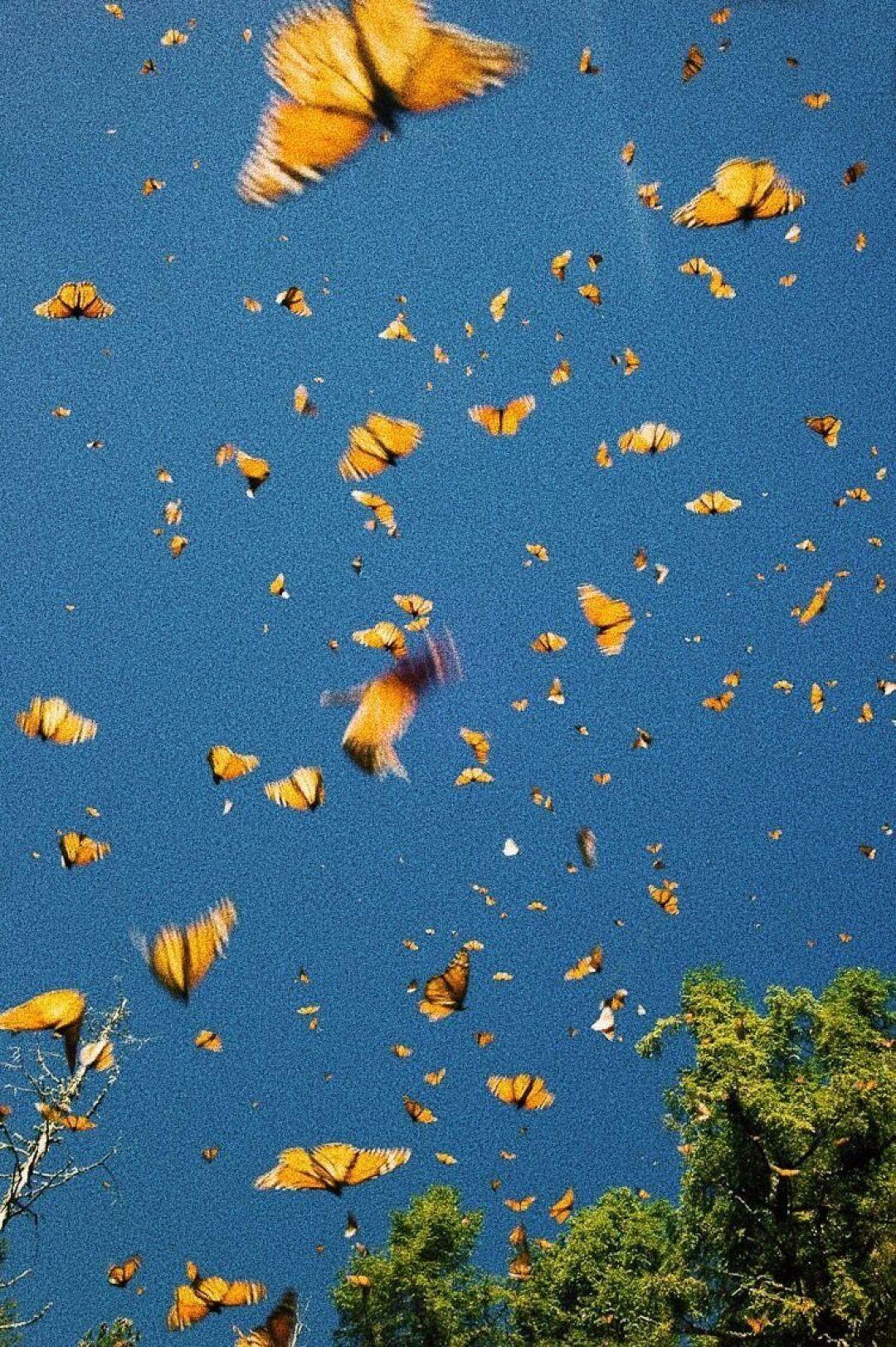 Cute Aesthetic Butterflies Wallpapers Wallpaper Cave