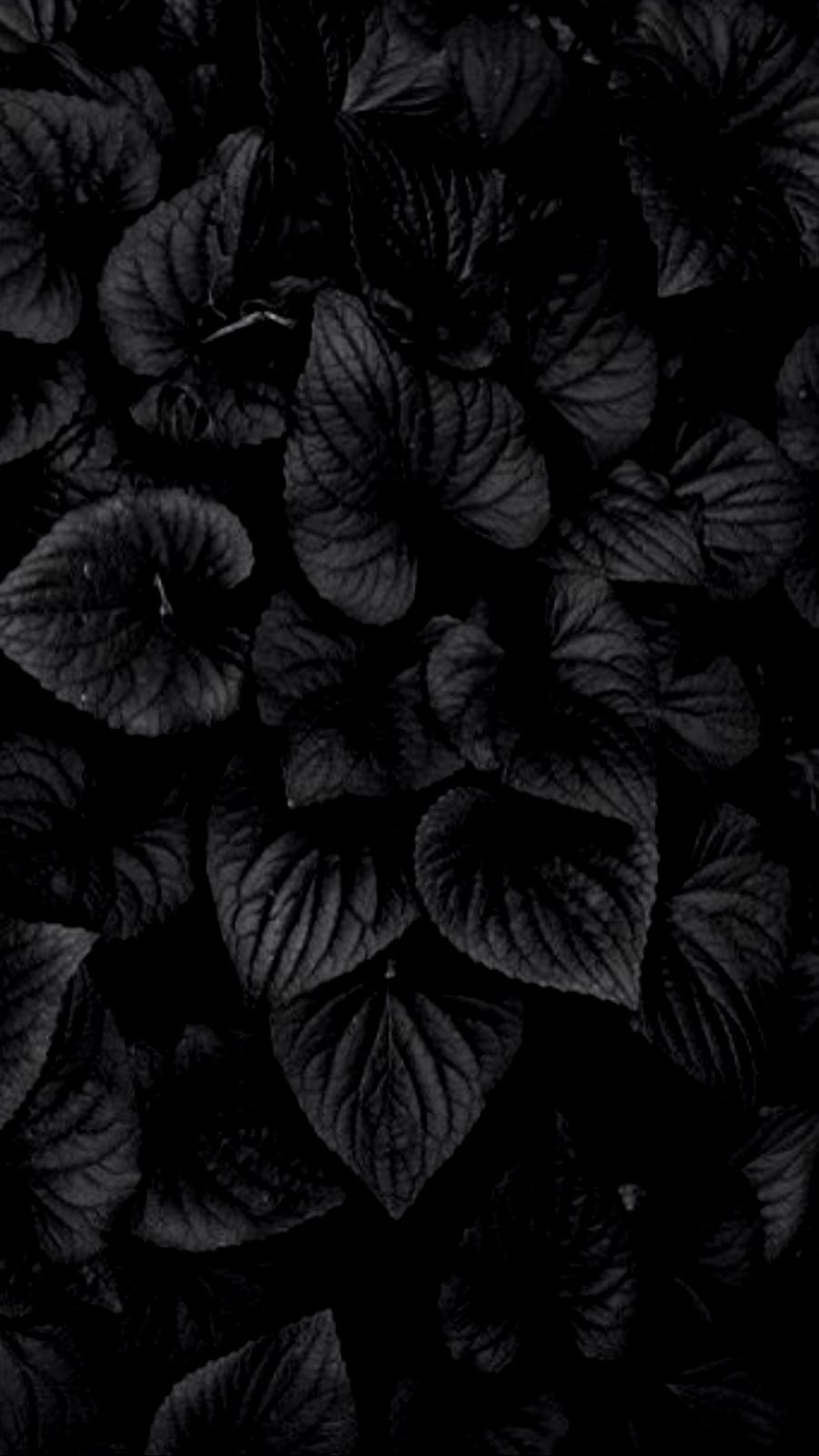 Aesthetic Black Flower Wallpapers - Wallpaper Cave