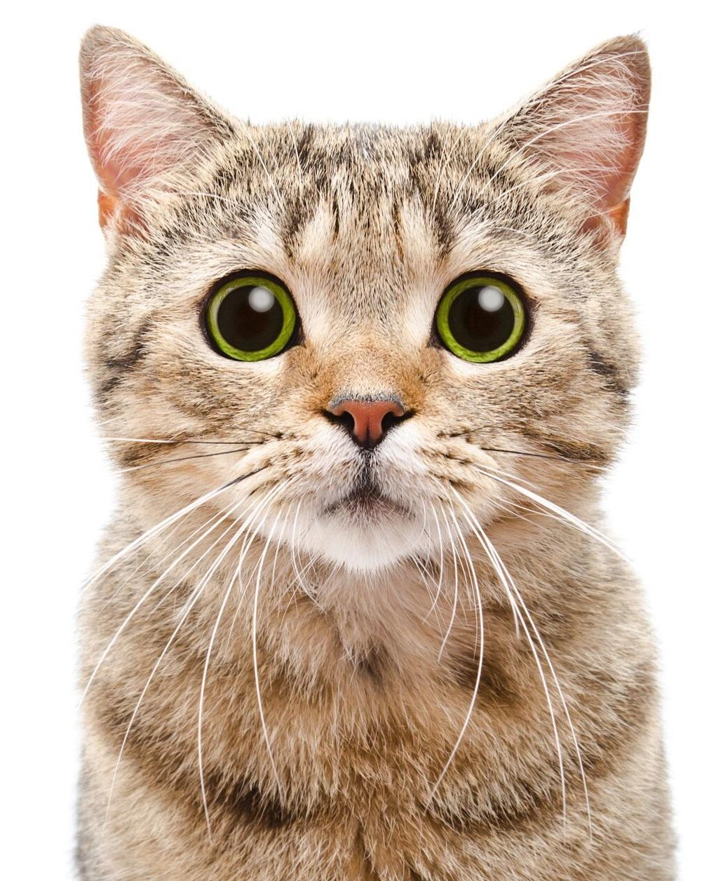 HD Cat Android Wallpapers - Wallpaper Cave