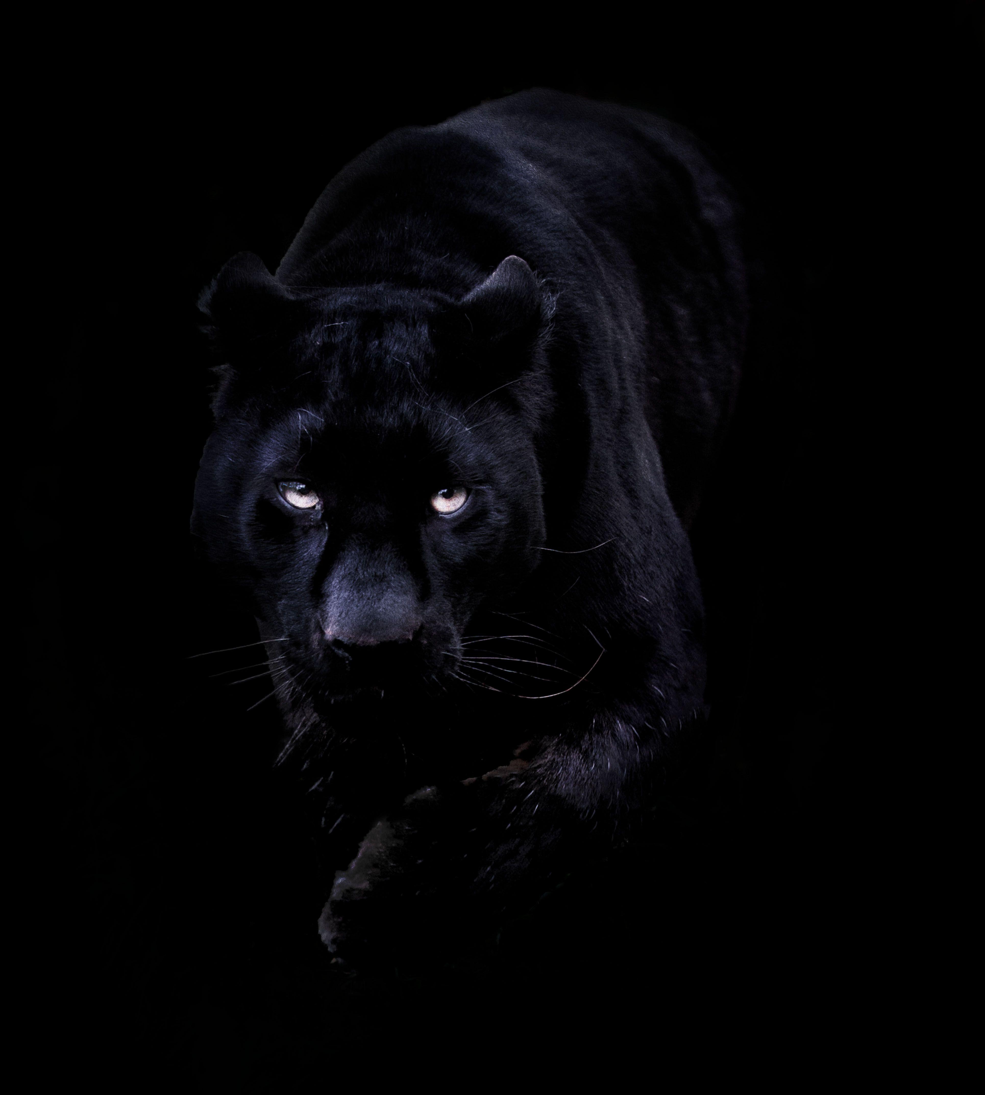 Black Jaguar Phone Hd Wallpapers Wallpaper Cave
