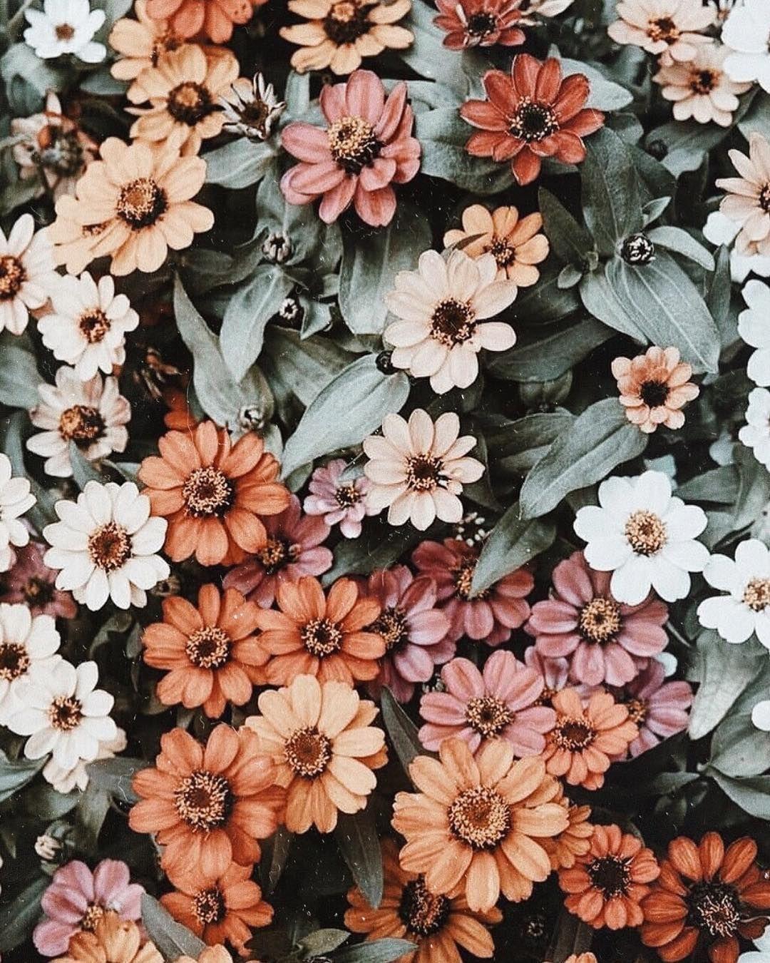 aesthetic flower wallpapers