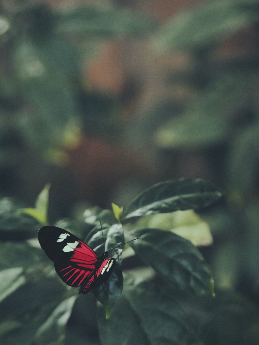 Red Butterfly Tumblr Wallpapers - Wallpaper Cave