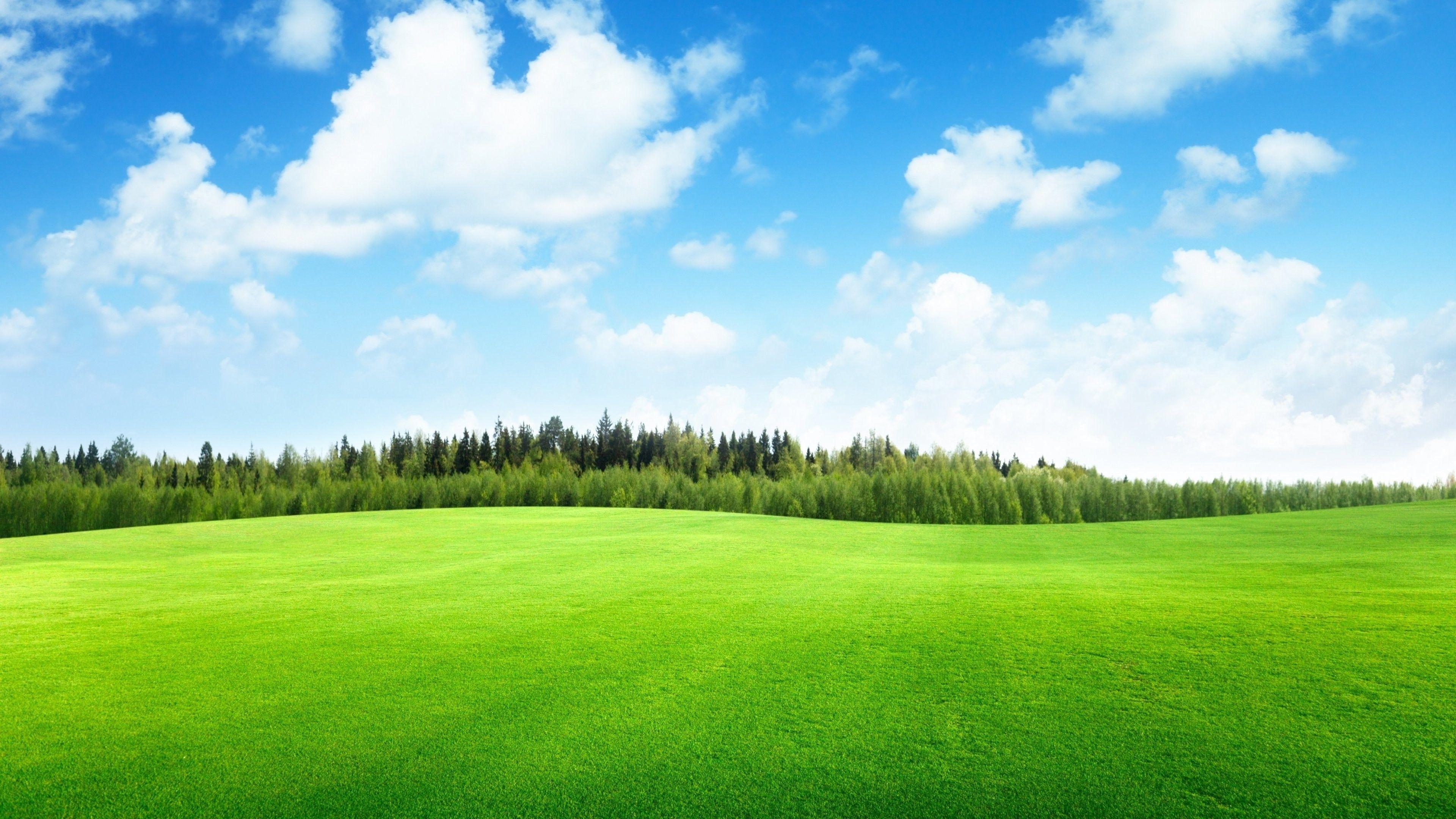 Clouds Trees Grass Hd Wallpapers Wallpaper Cave Wallpaper grass field rainbow hill fog