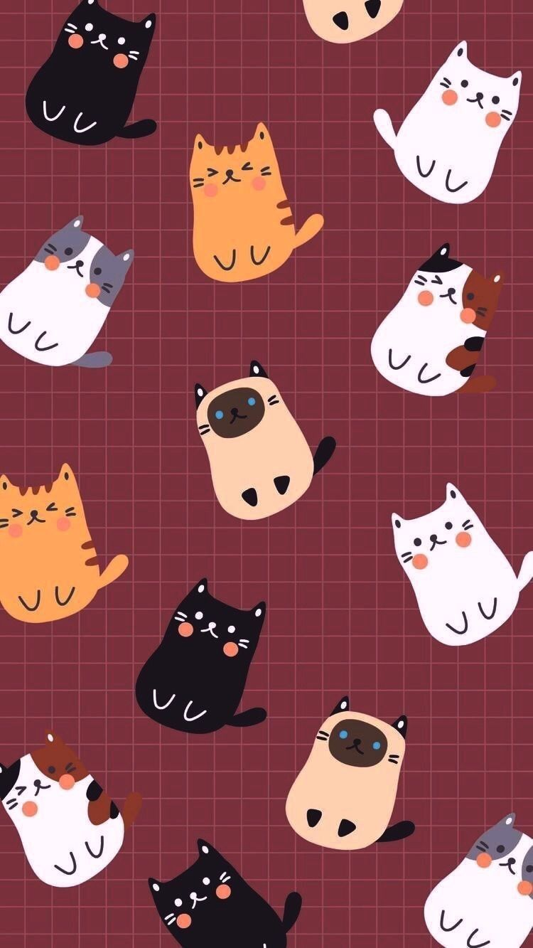 Cat Phone Cute Wallpapers Wallpaper Cave
