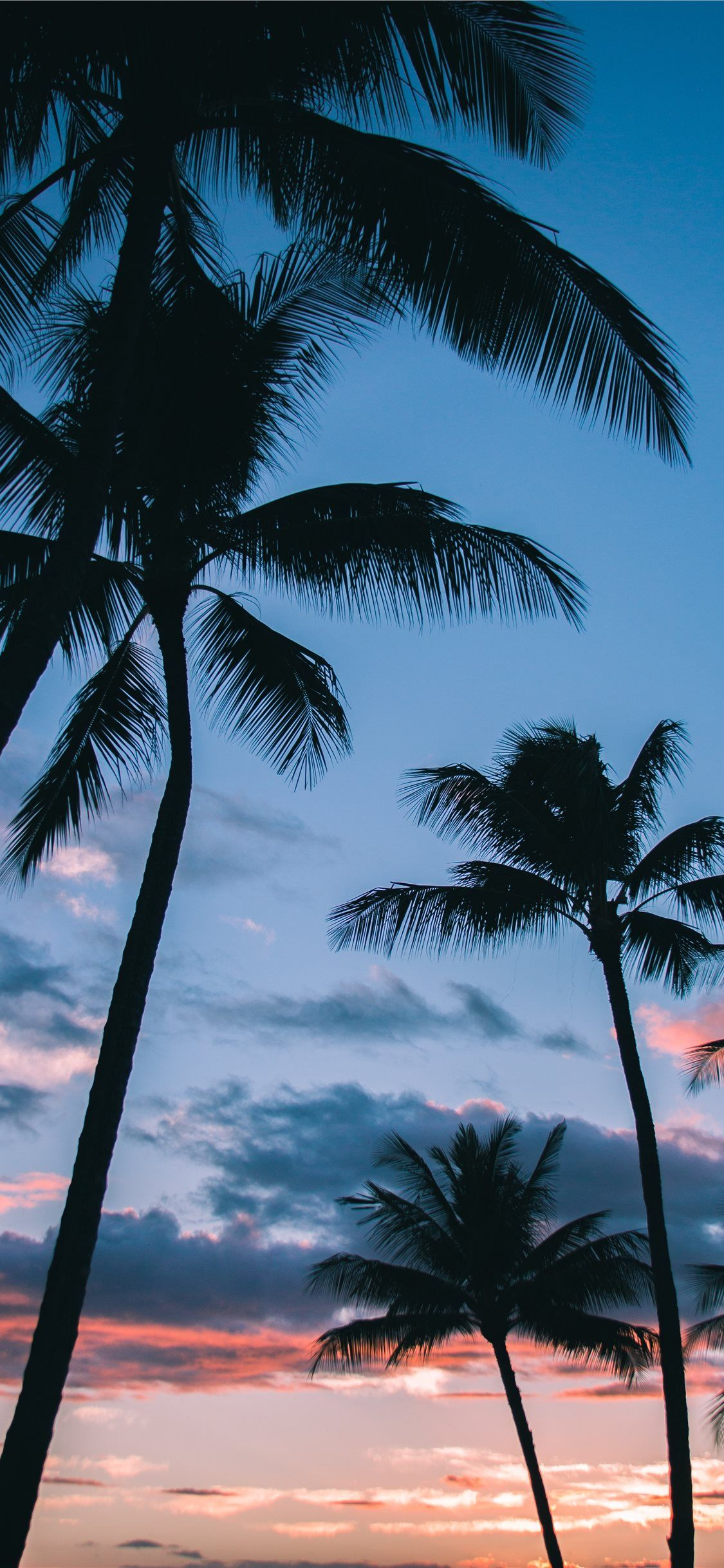Aesthetic Palm Trees Wallpapers - Wallpaper Cave