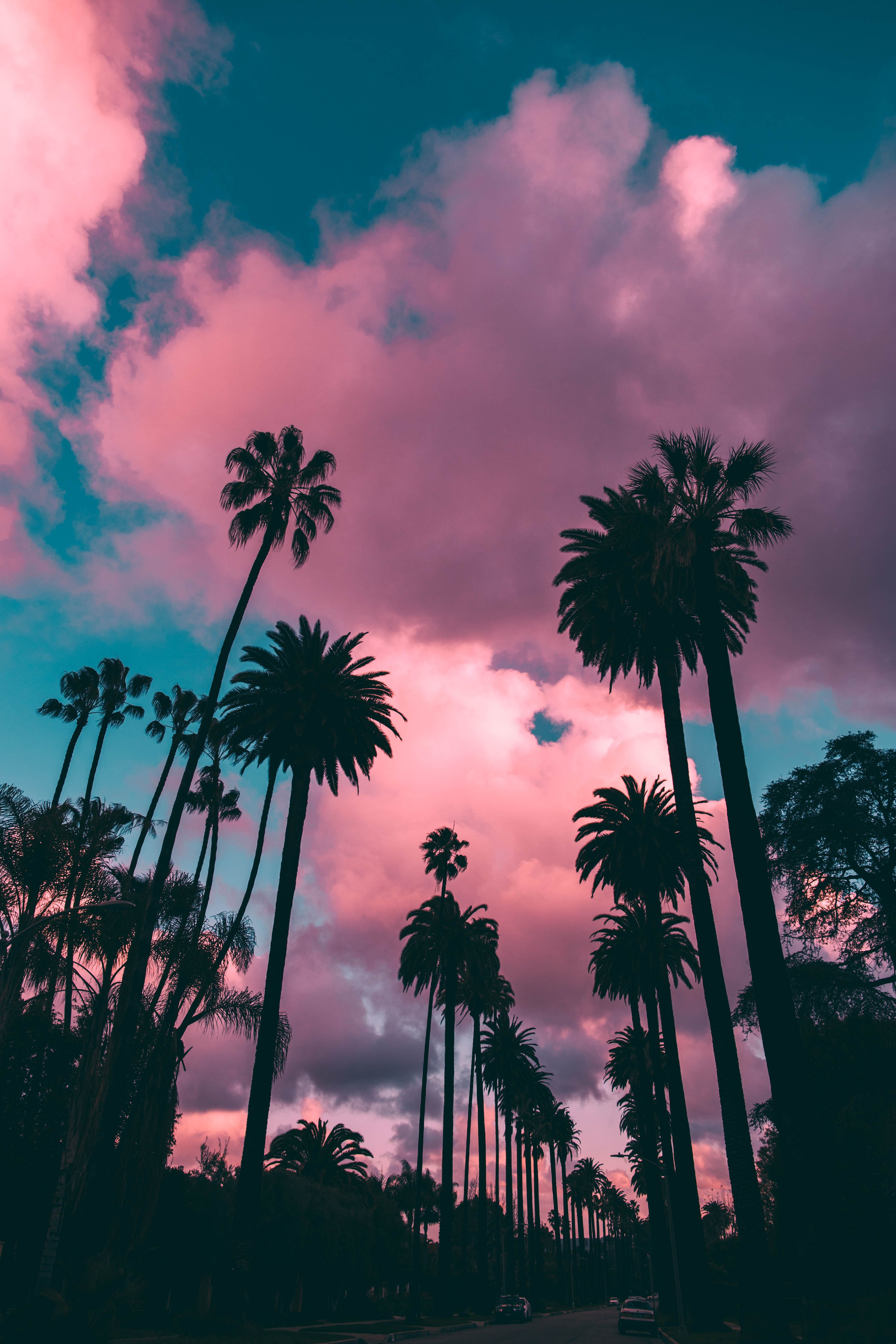 Pink Trees Aesthetic Wallpapers Wallpaper Cave
