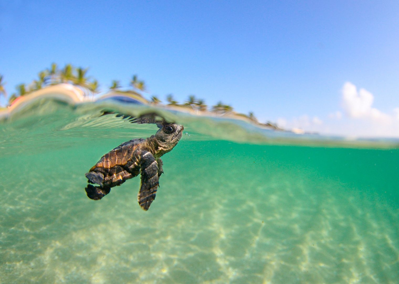 Baby Sea Turtles Wallpapers Wallpaper Cave