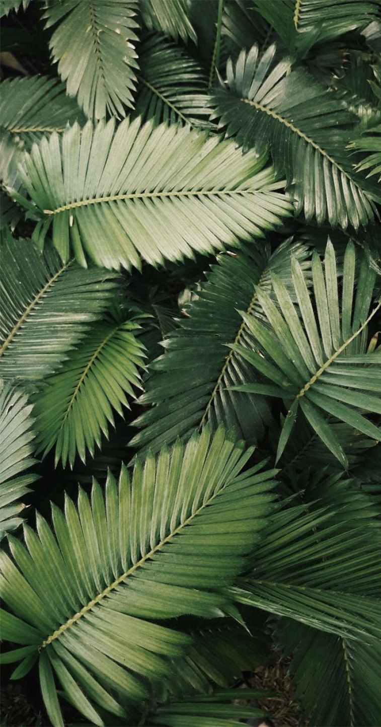 Tropical Leaves HD Phone Wallpapers   Wallpaper Cave