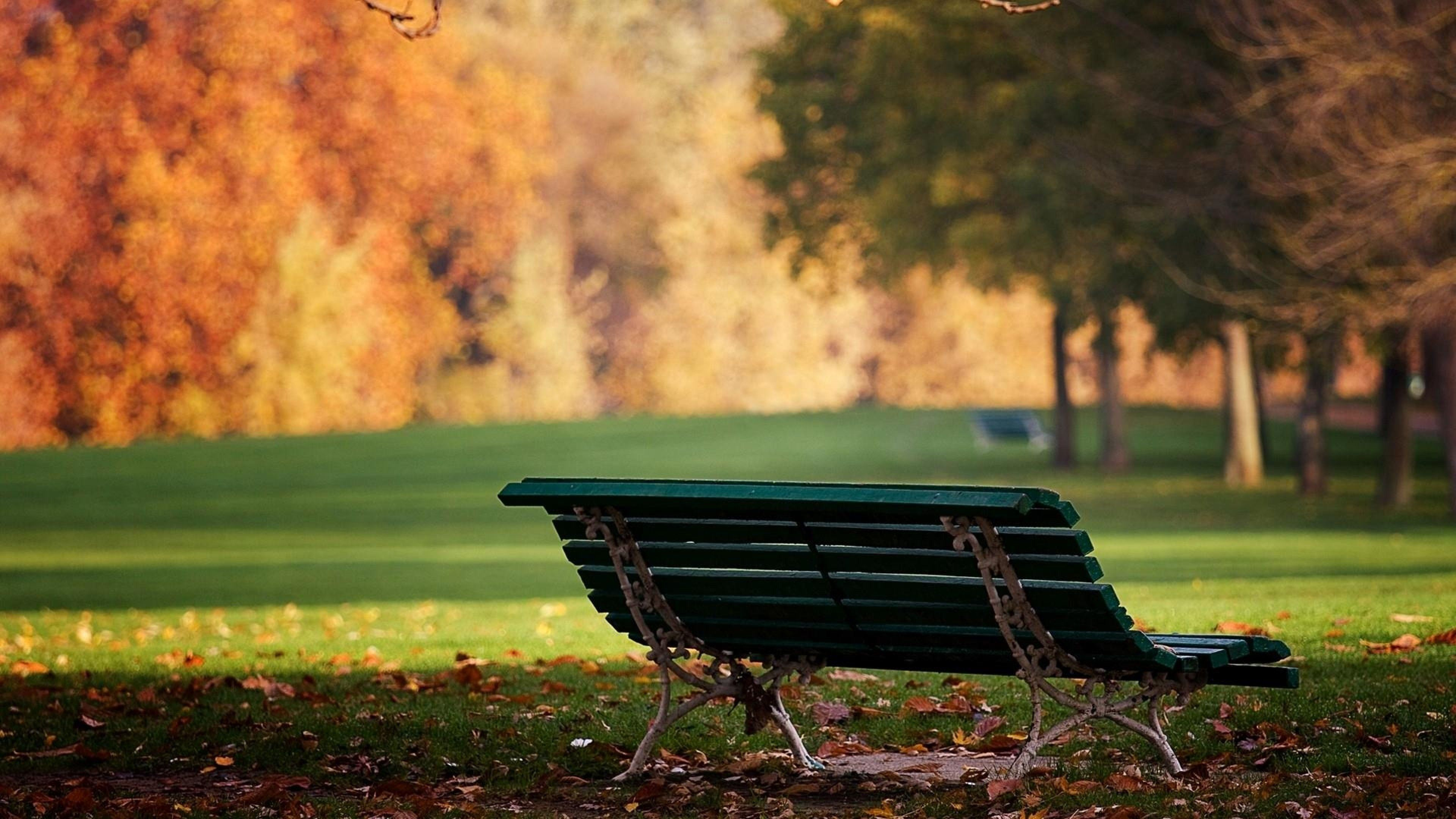 Bench in Garden During Summer Season hd wallpapers