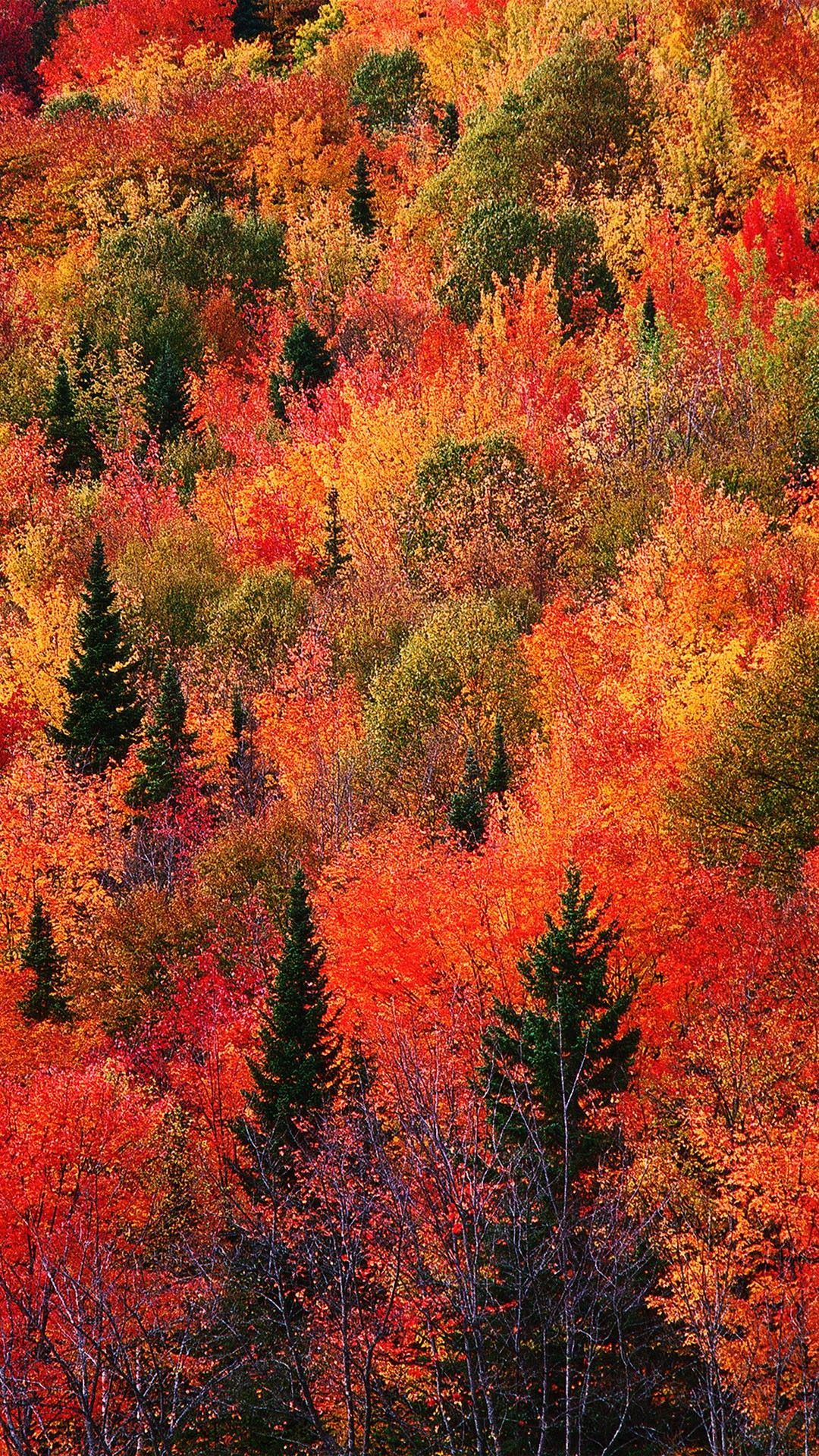 Autumn Phone 4k Hd Wallpapers Wallpaper Cave