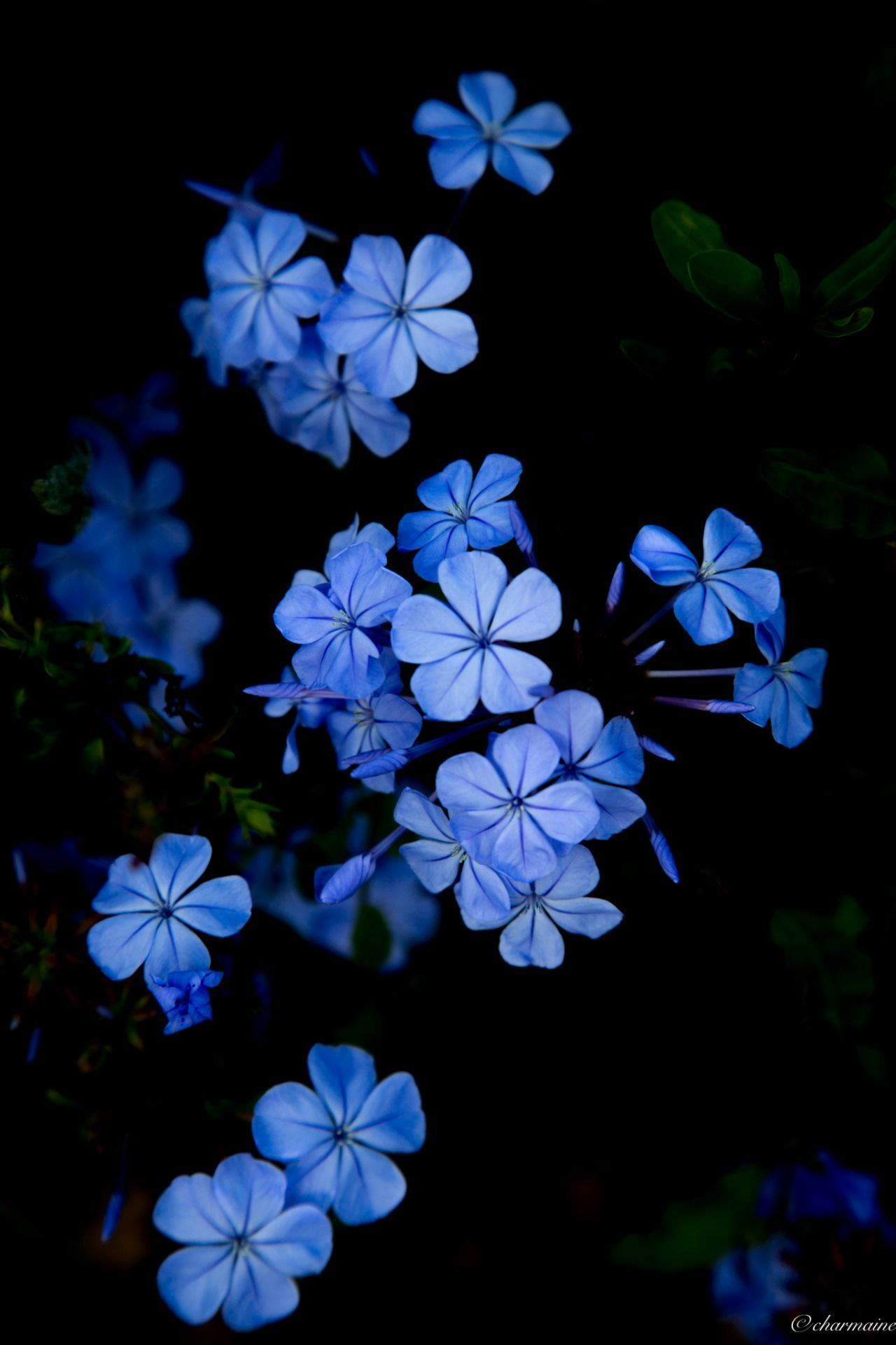 Dark Blue Flower Aesthetic Wallpapers Wallpaper Cave