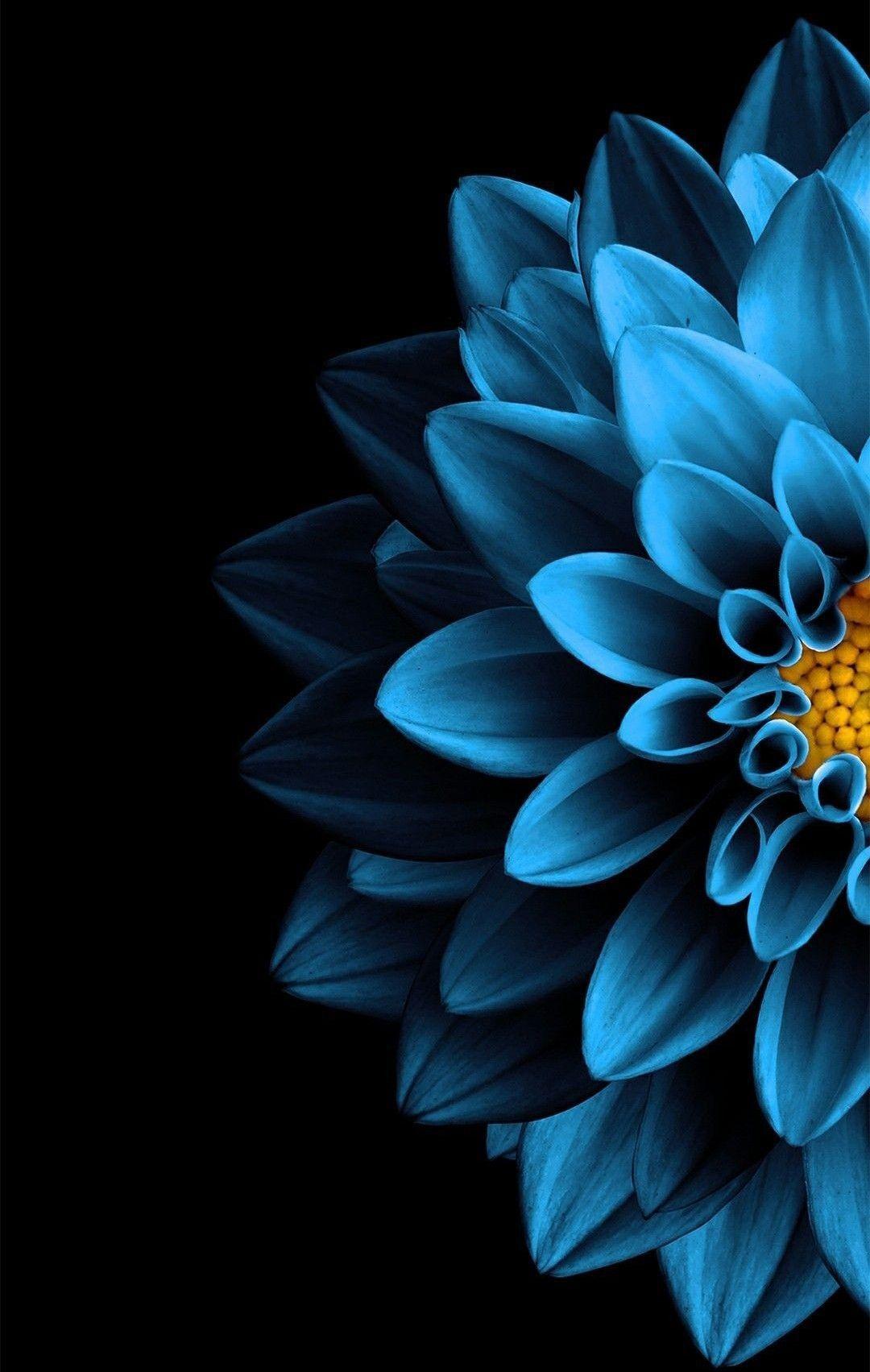 Dark Blue Flower Aesthetic Wallpapers - Wallpaper Cave