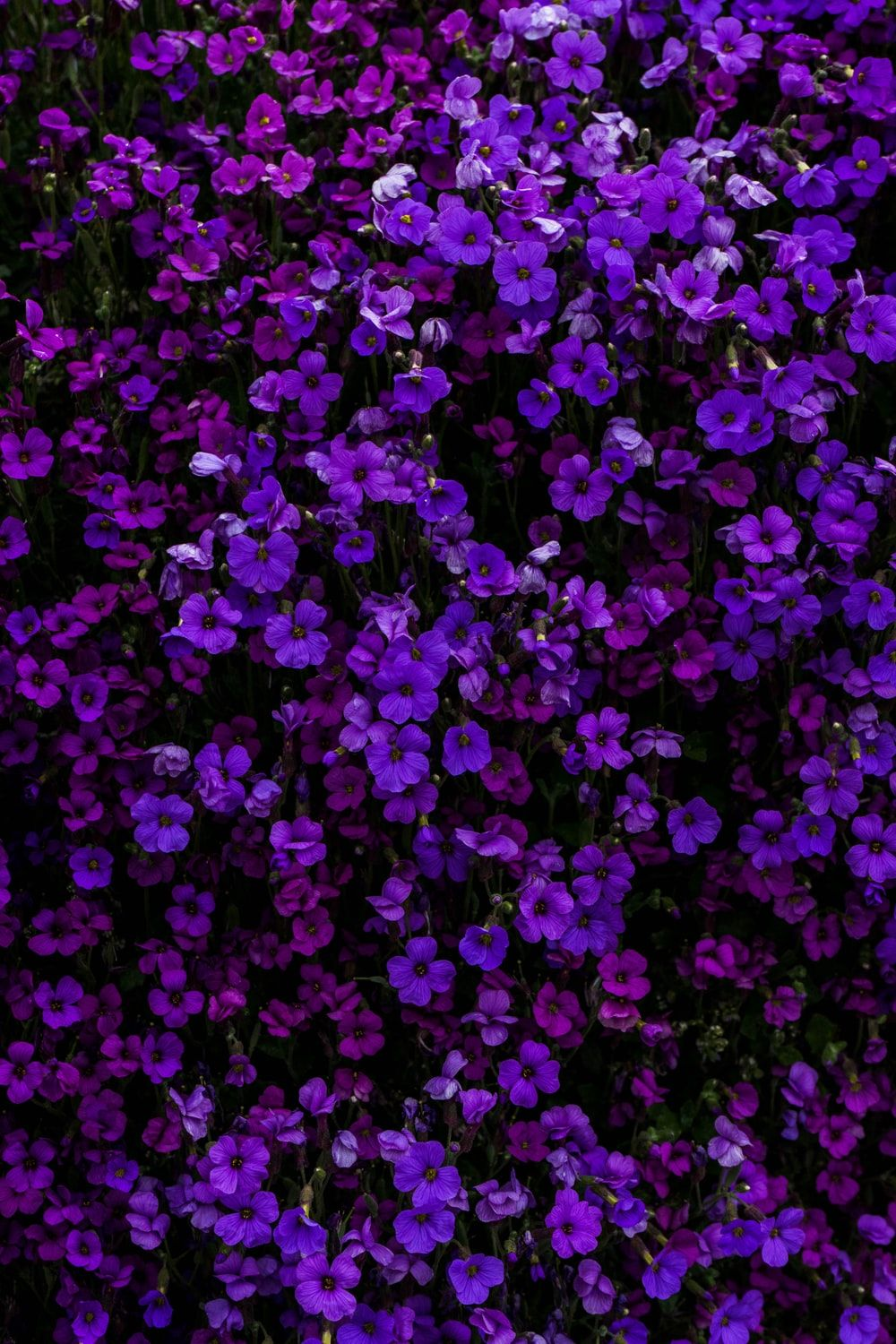 Purple Wallpapers: Free HD Download [500+ HQ]