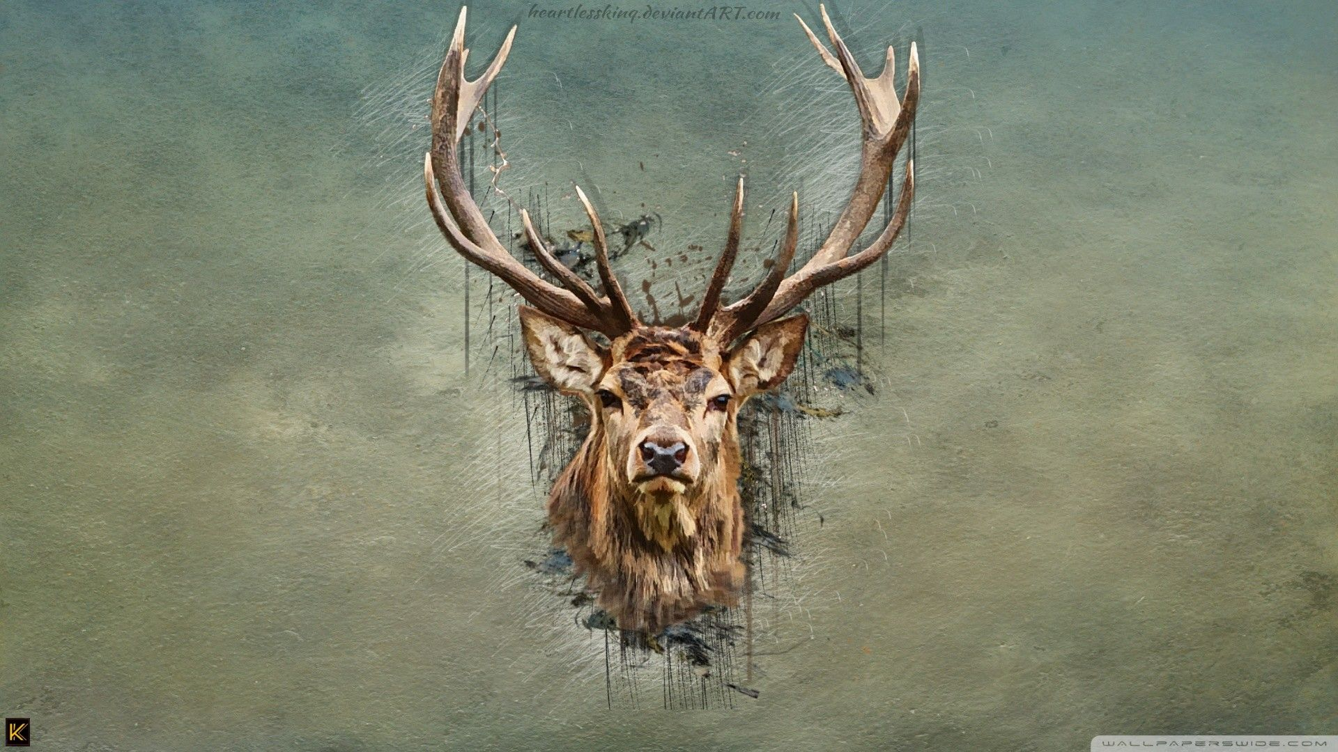 Red Deer Wallpapers Wallpaper Cave