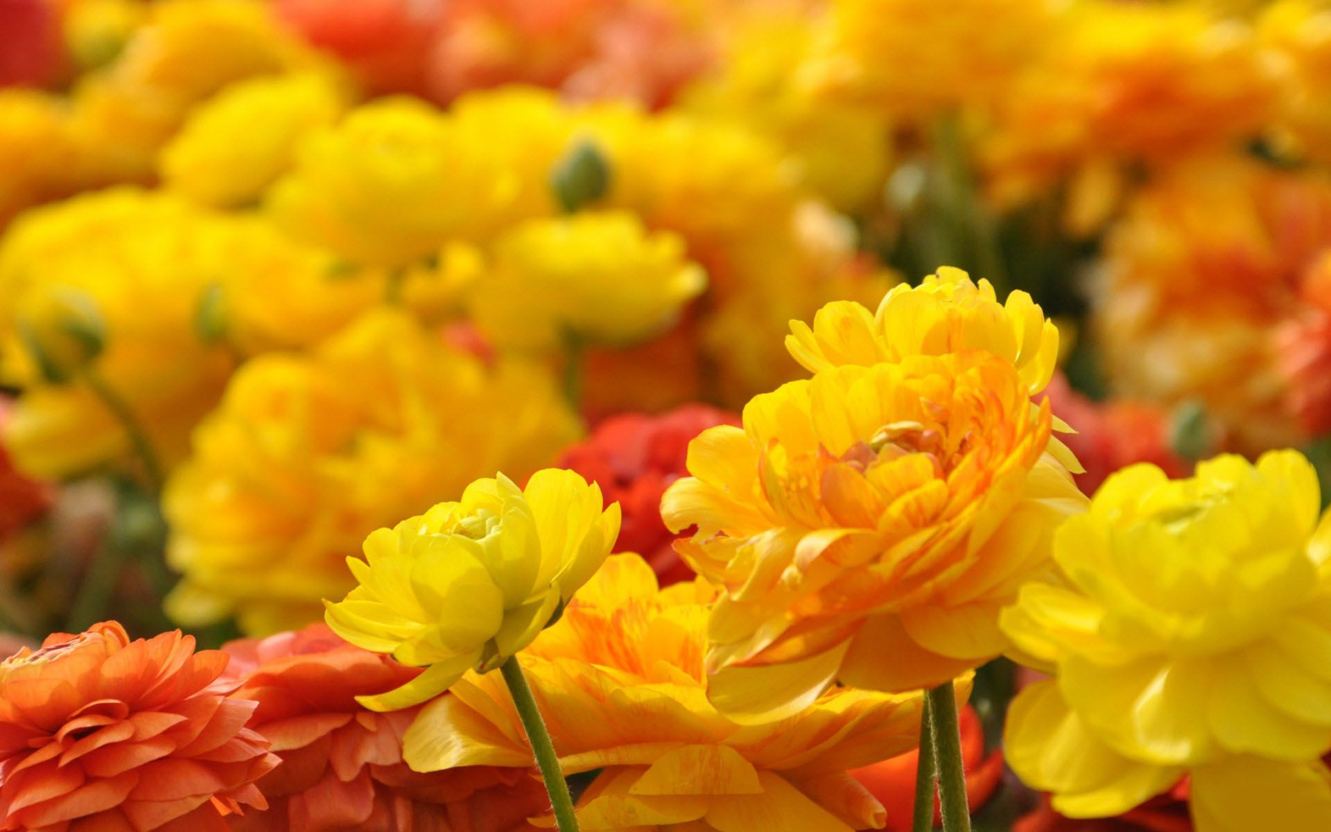 Yellow Flower Hd Wallpapers Wallpaper Cave