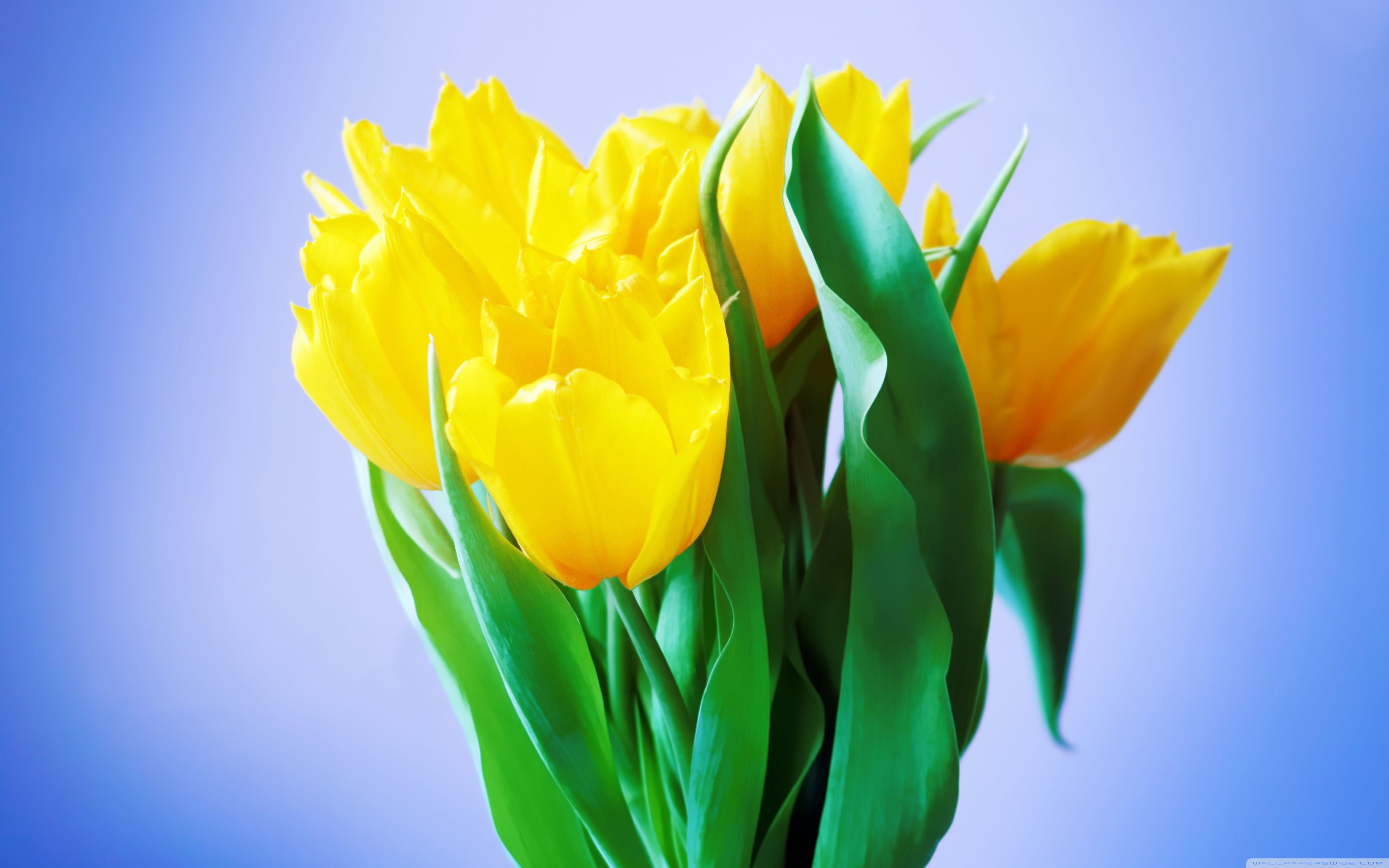 Bouquet Of Spring Flowers Wallpapers - Wallpaper Cave