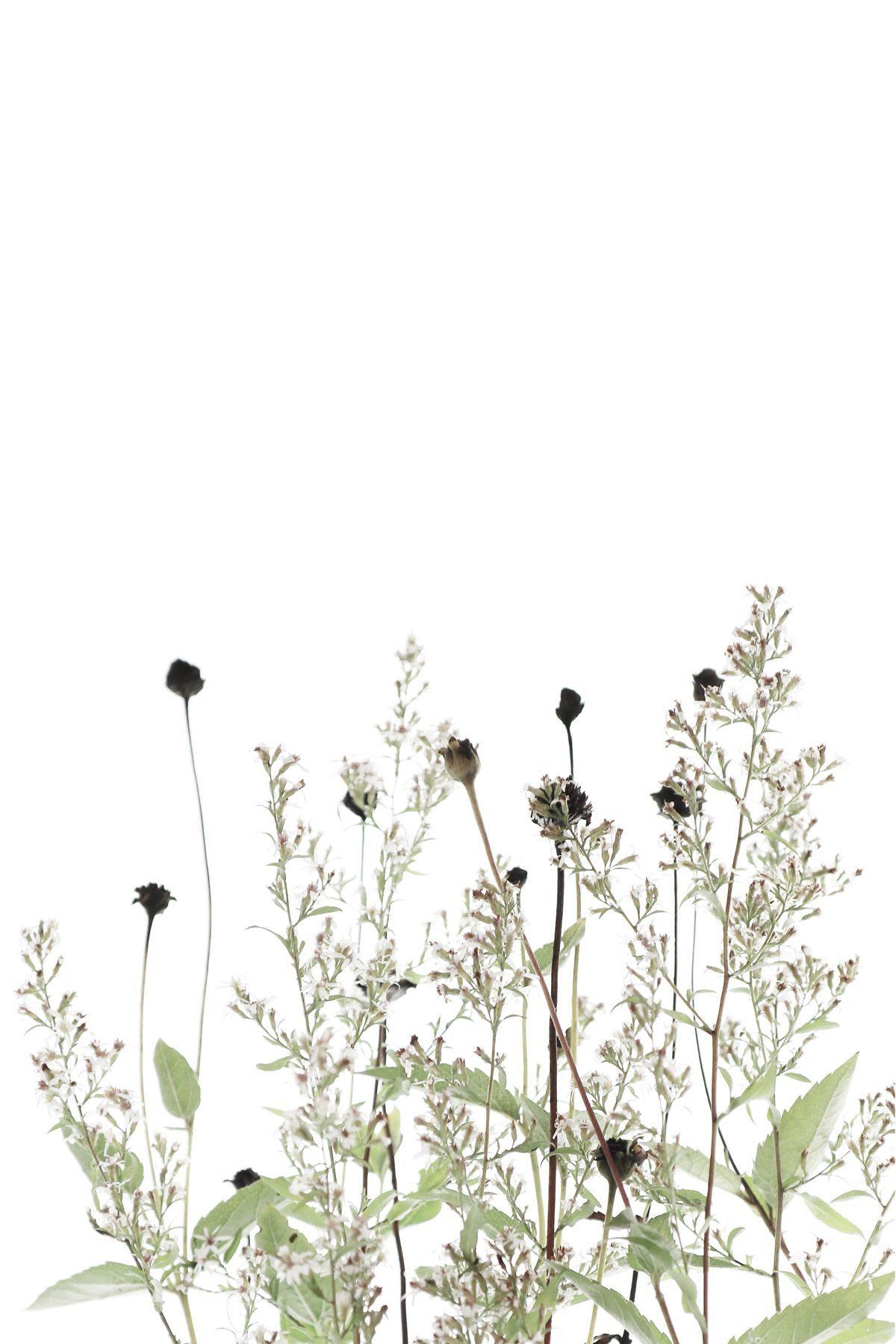 Aesthetic Drawings Flowers Wallpapers Wallpaper Cave
