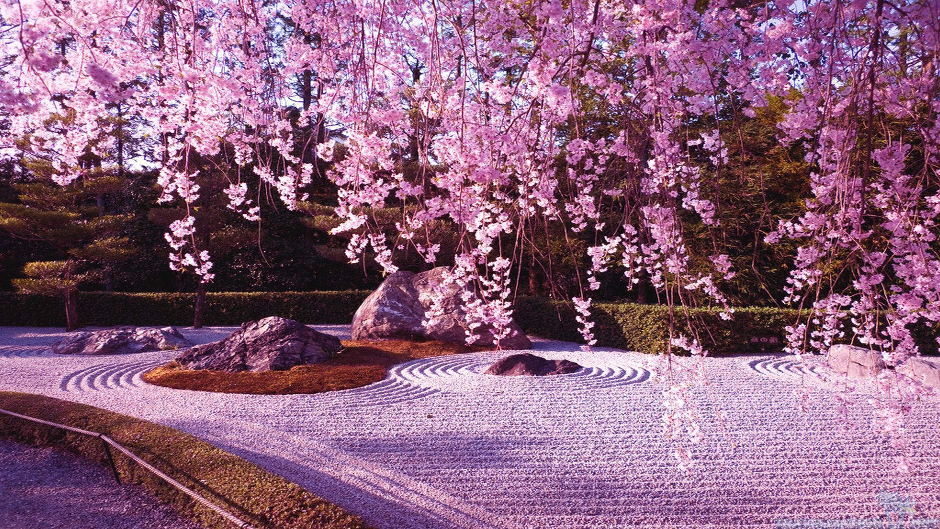 Ps4 4k Anime Cherry Blossom Wallpapers - Wallpaper Cave