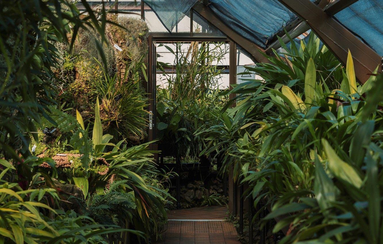 Desktop Plants Wallpapers - Wallpaper Cave