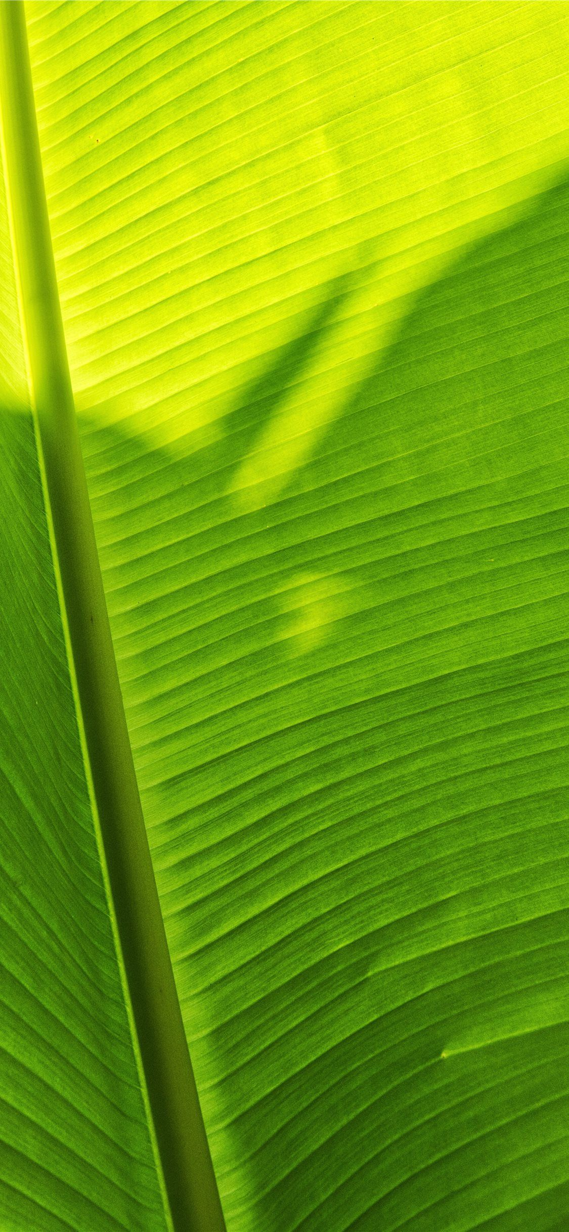 Banana Leaf Wallpapers - Wallpaper Cave