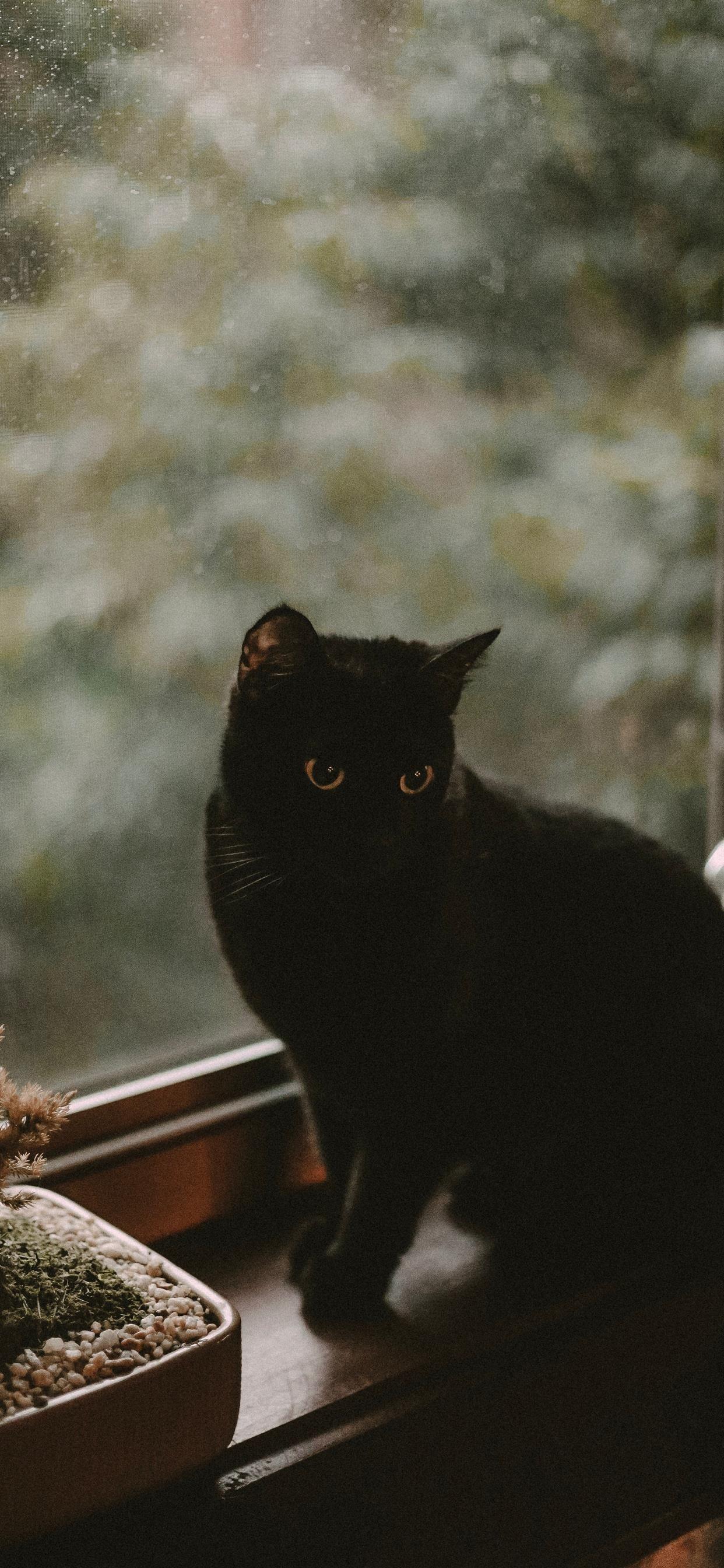 cat iphone wallpapers