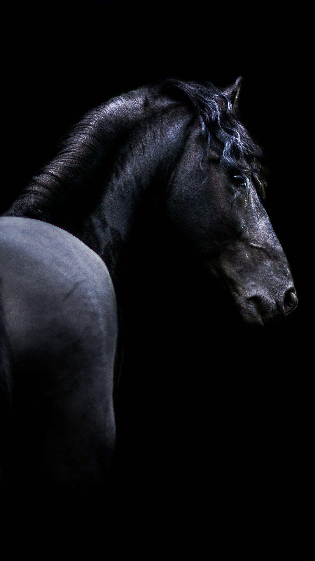 Black Horse Iphone Wallpapers Wallpaper Cave