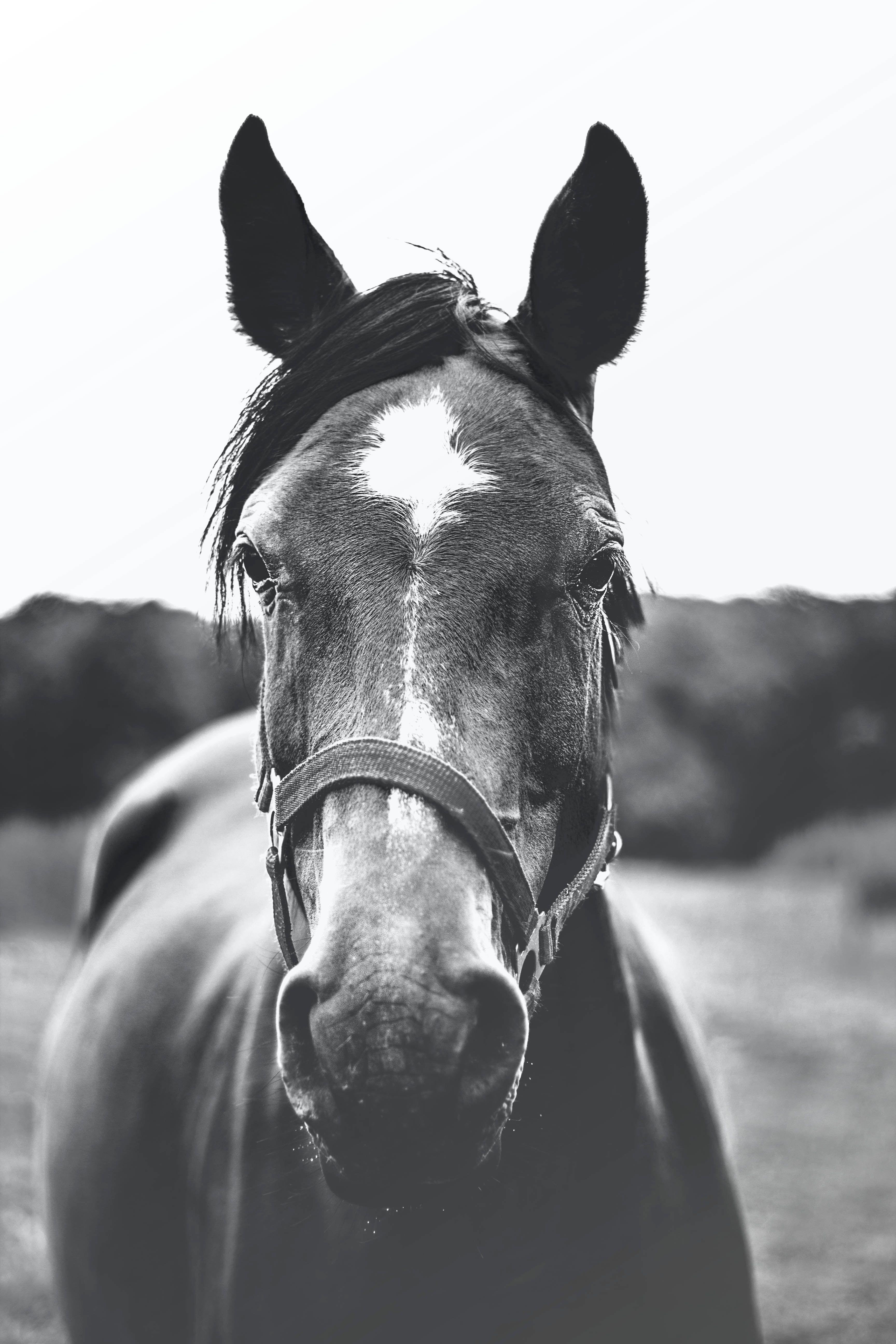 Black Horse Iphone Wallpapers Wallpaper Cave
