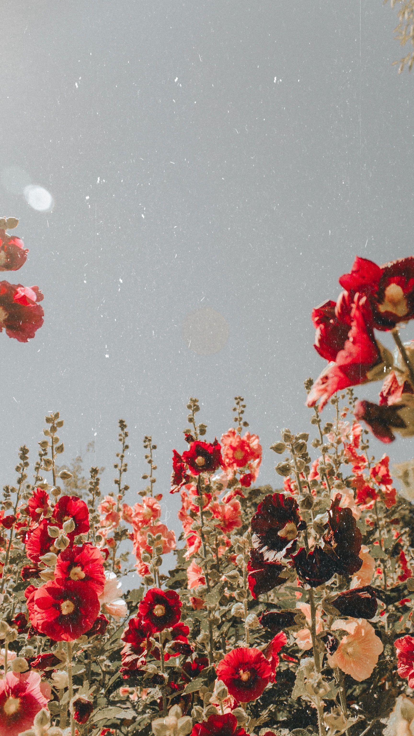 aesthetic flower field wallpapers