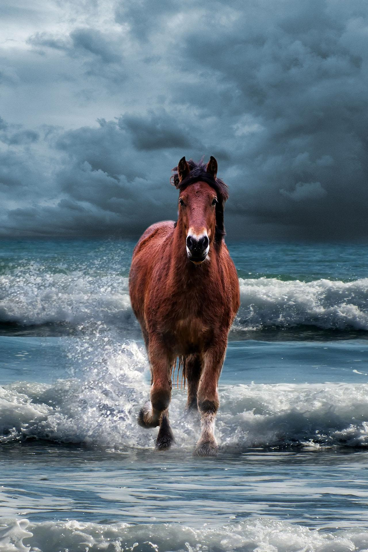 Aesthetic Horse Wallpapers Wallpaper Cave