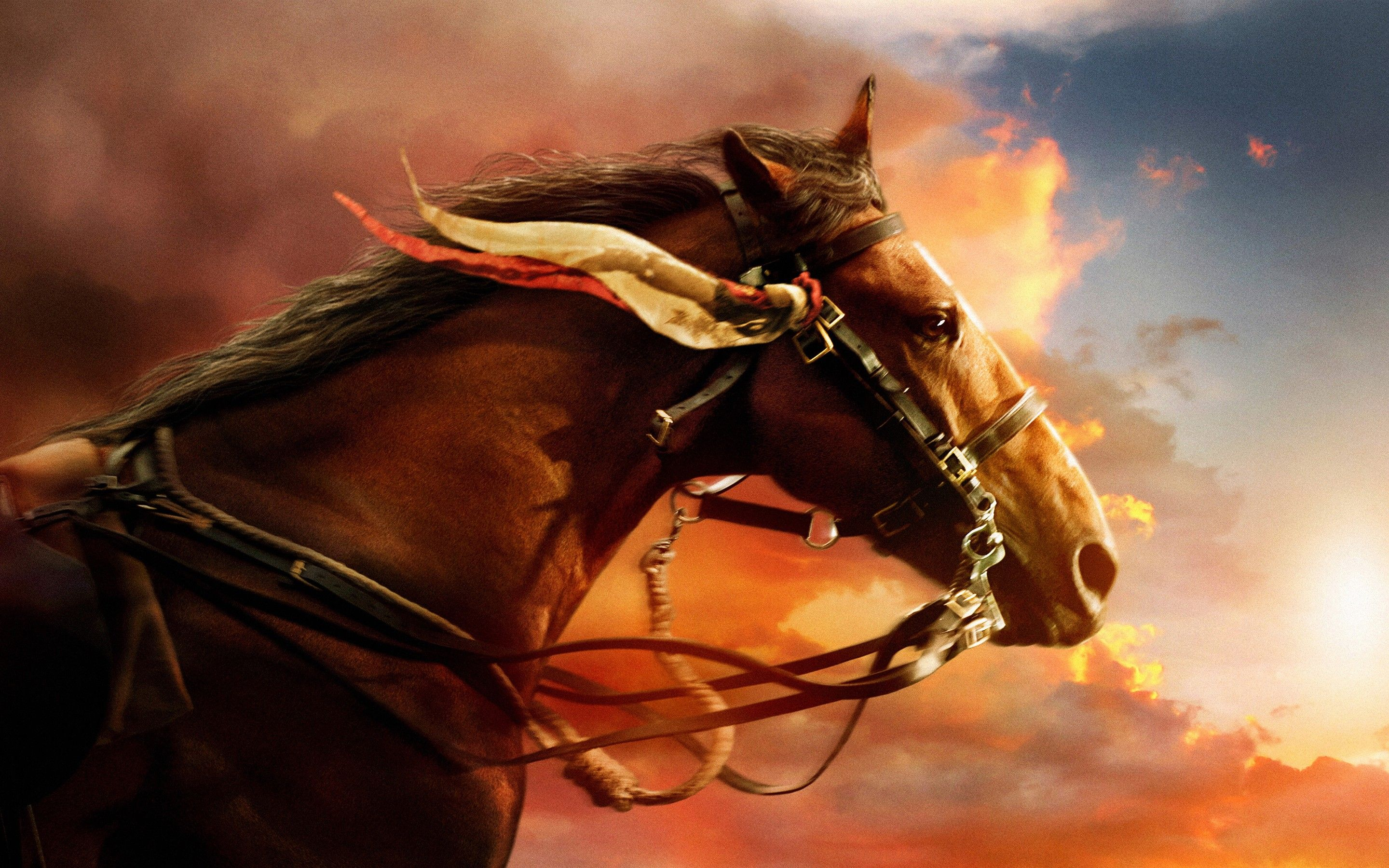 War Horse Wallpapers Wallpaper Cave