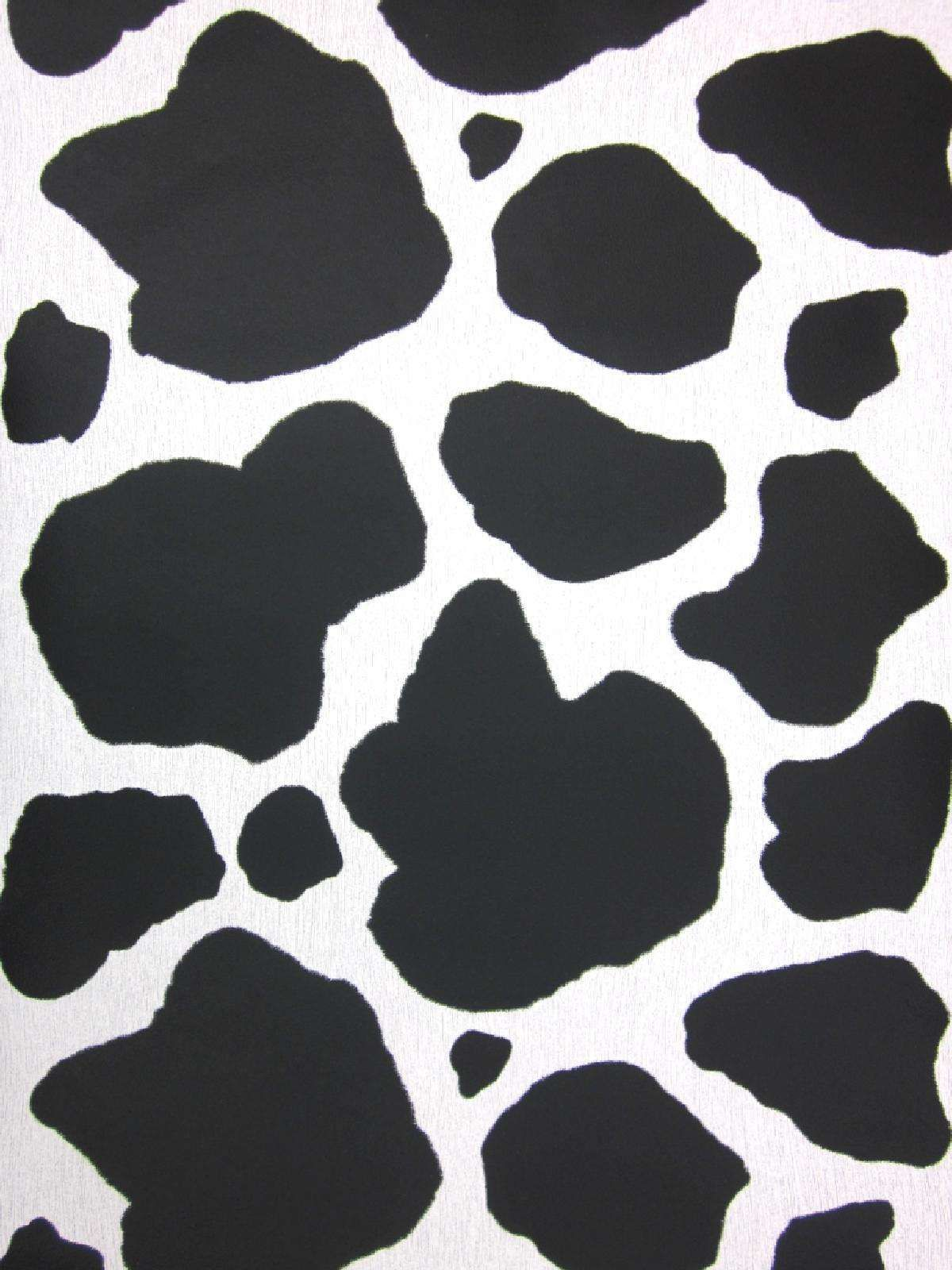 Cow Aesthetic Wallpapers - Wallpaper Cave