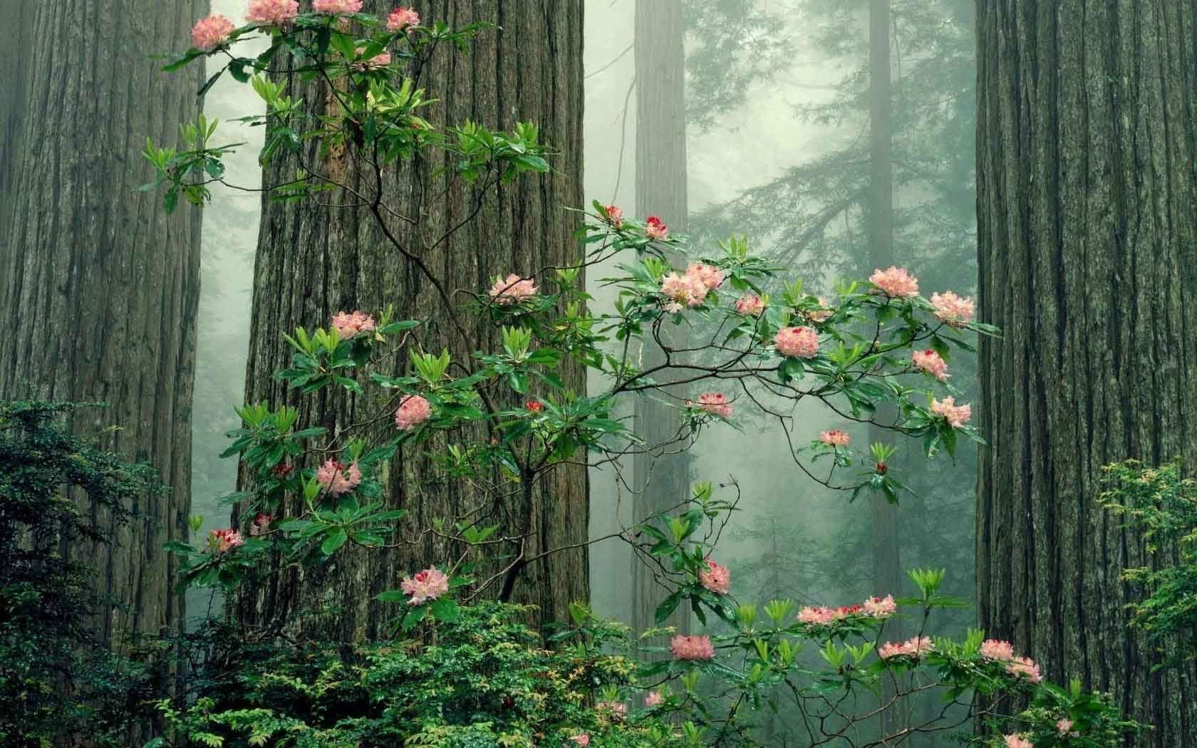aesthetic wallpapers laptop flower forest plant spring nature wild pc park flowers roses national narodowy redwood witch garden trees tree
