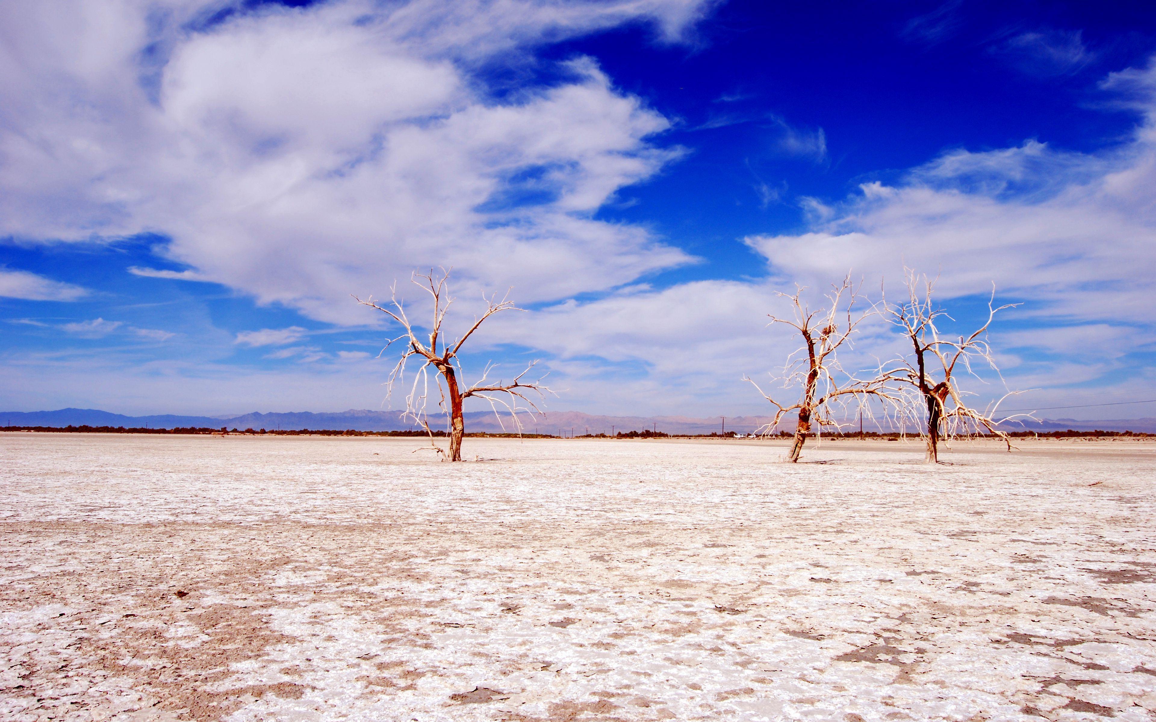 Desert Tree Sky HD Wallpapers - Wallpaper Cave