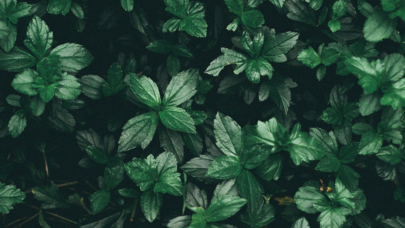 Green Aesthetic Laptop Wallpapers - Wallpaper Cave