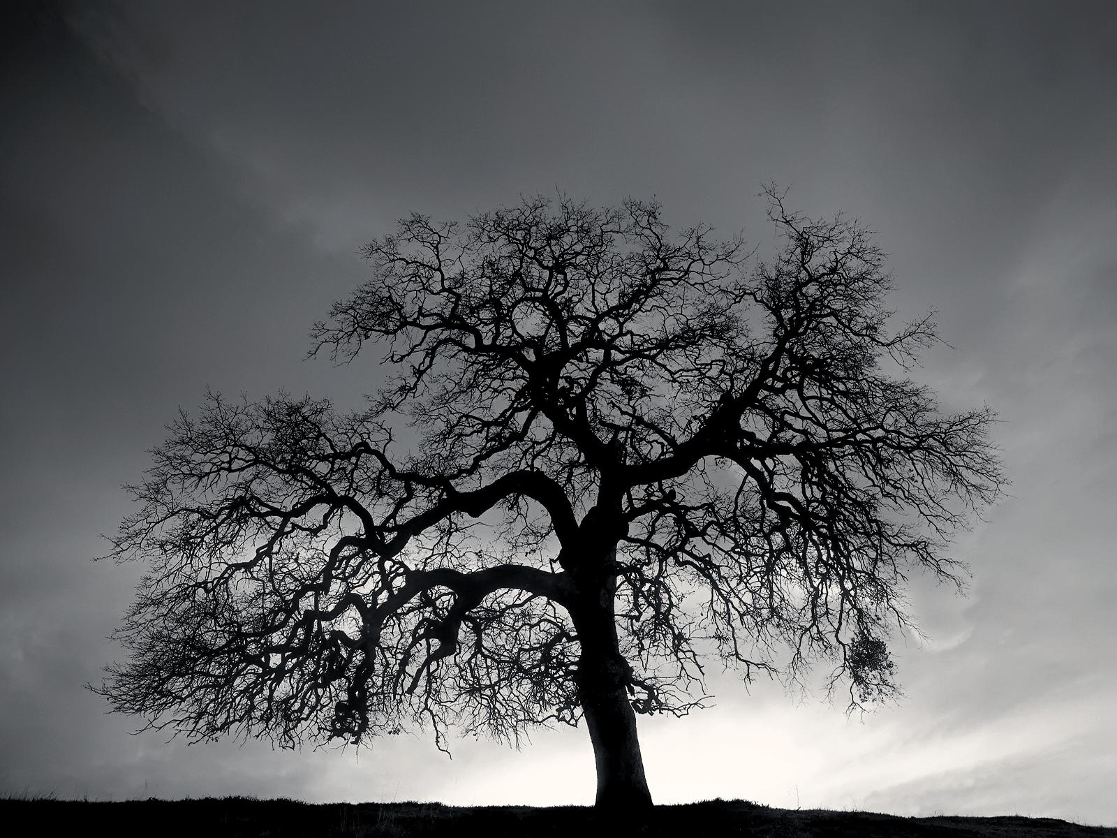 фотобанк черно белые деревья сегодня