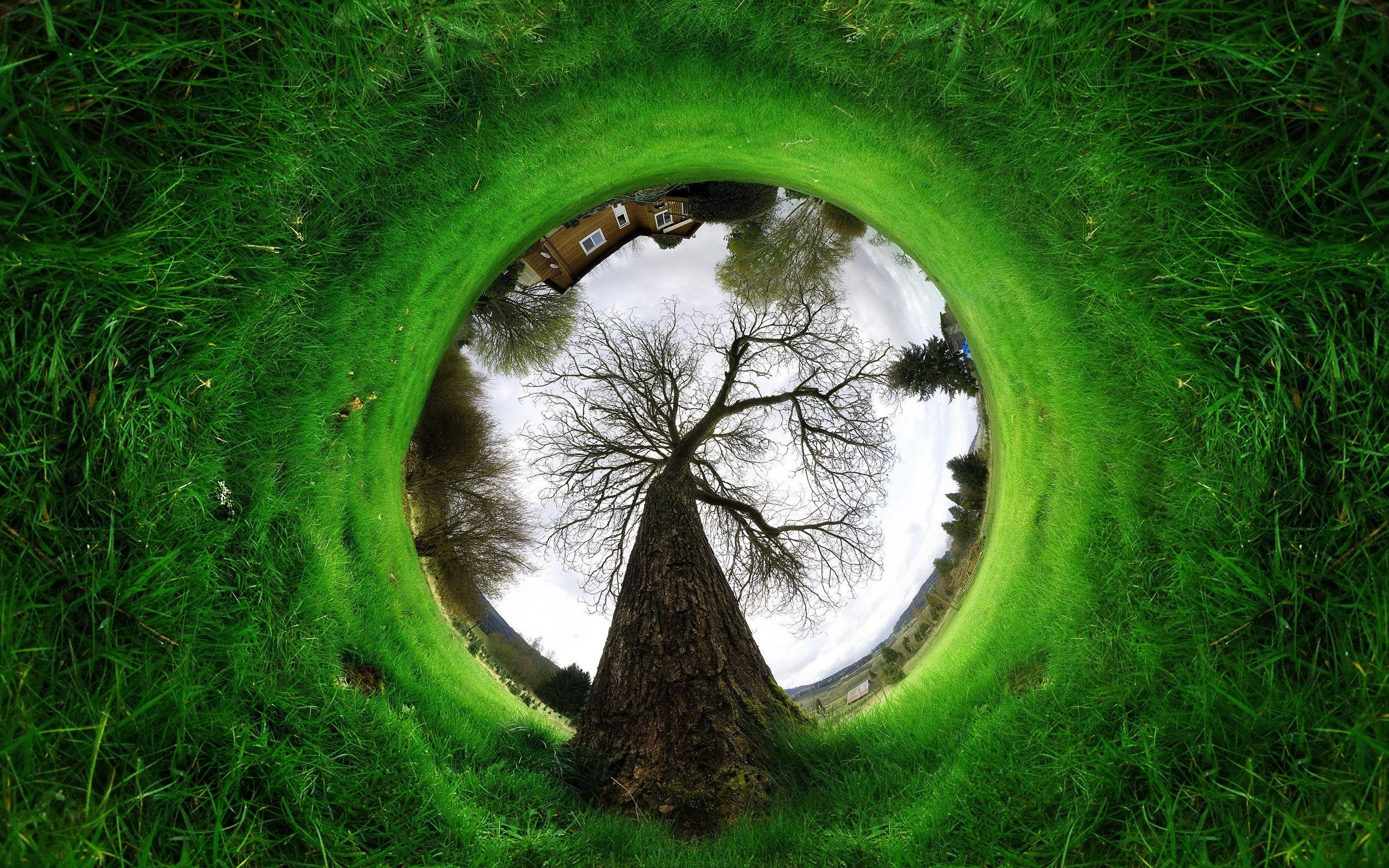 Save Tree Wallpapers Wallpaper Cave