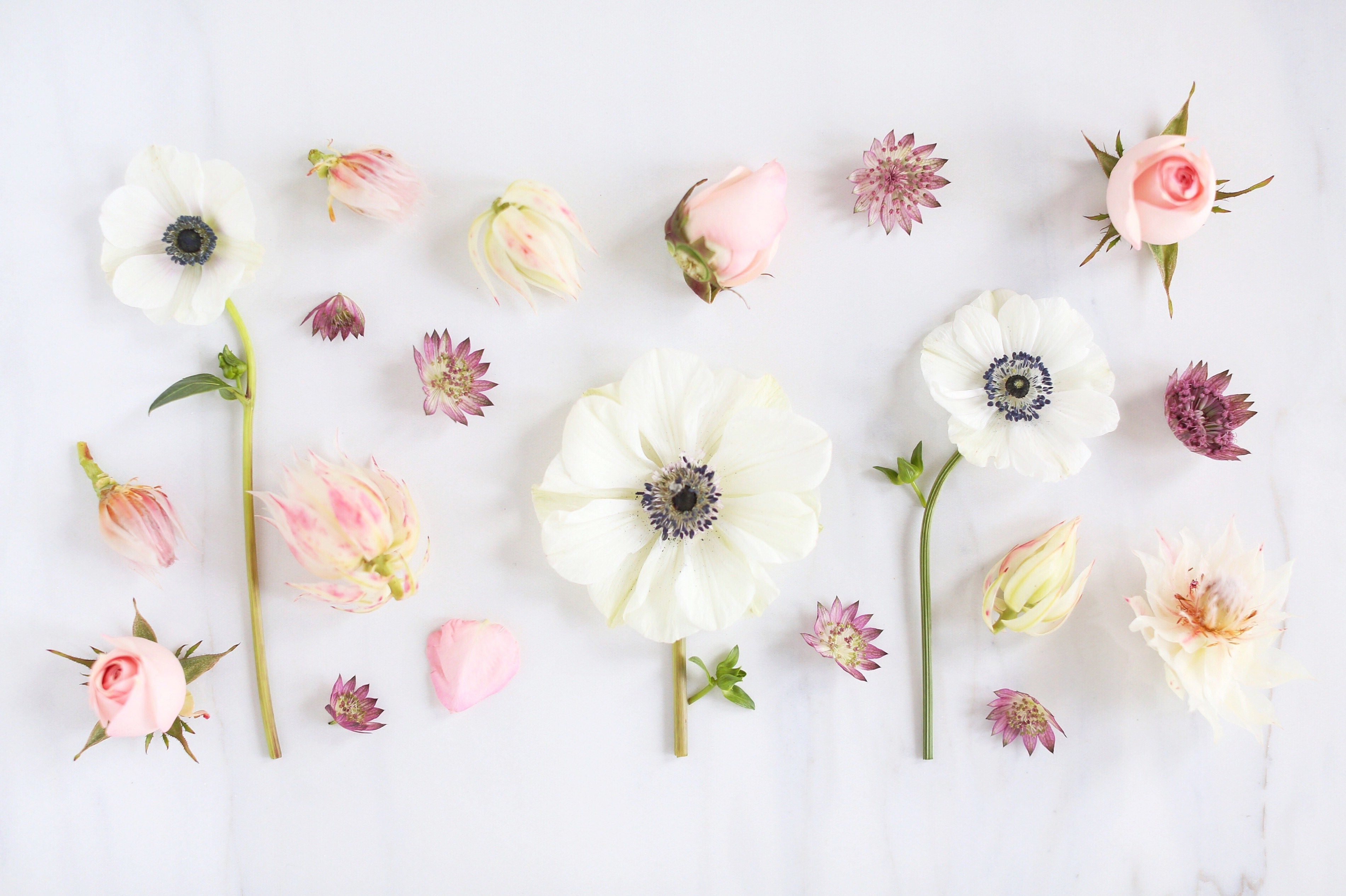 Minimalist Pastel Desktop Plant Wallpapers - Wallpaper Cave