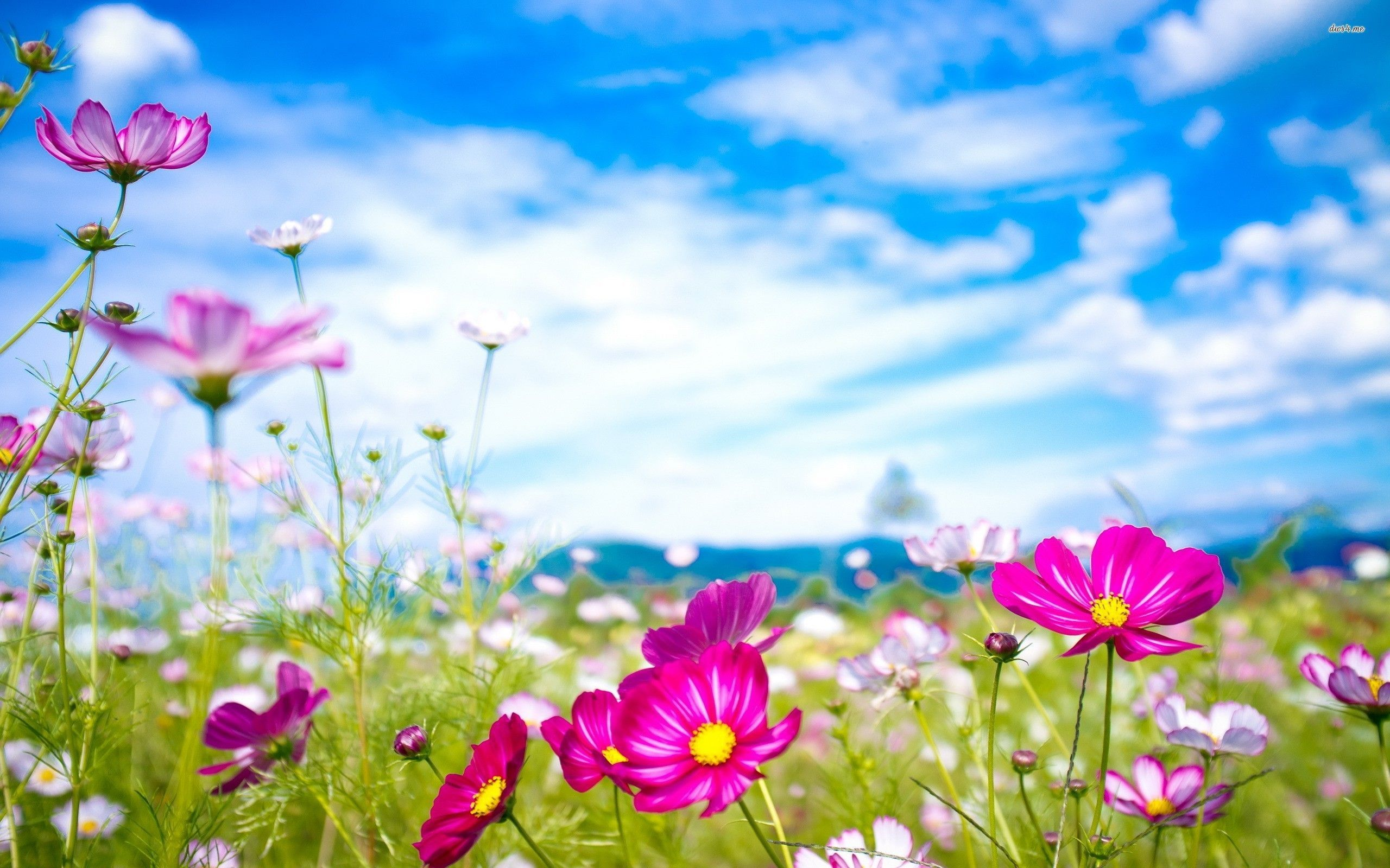 Wallpapers Nature Flowers Wallpaper Cave