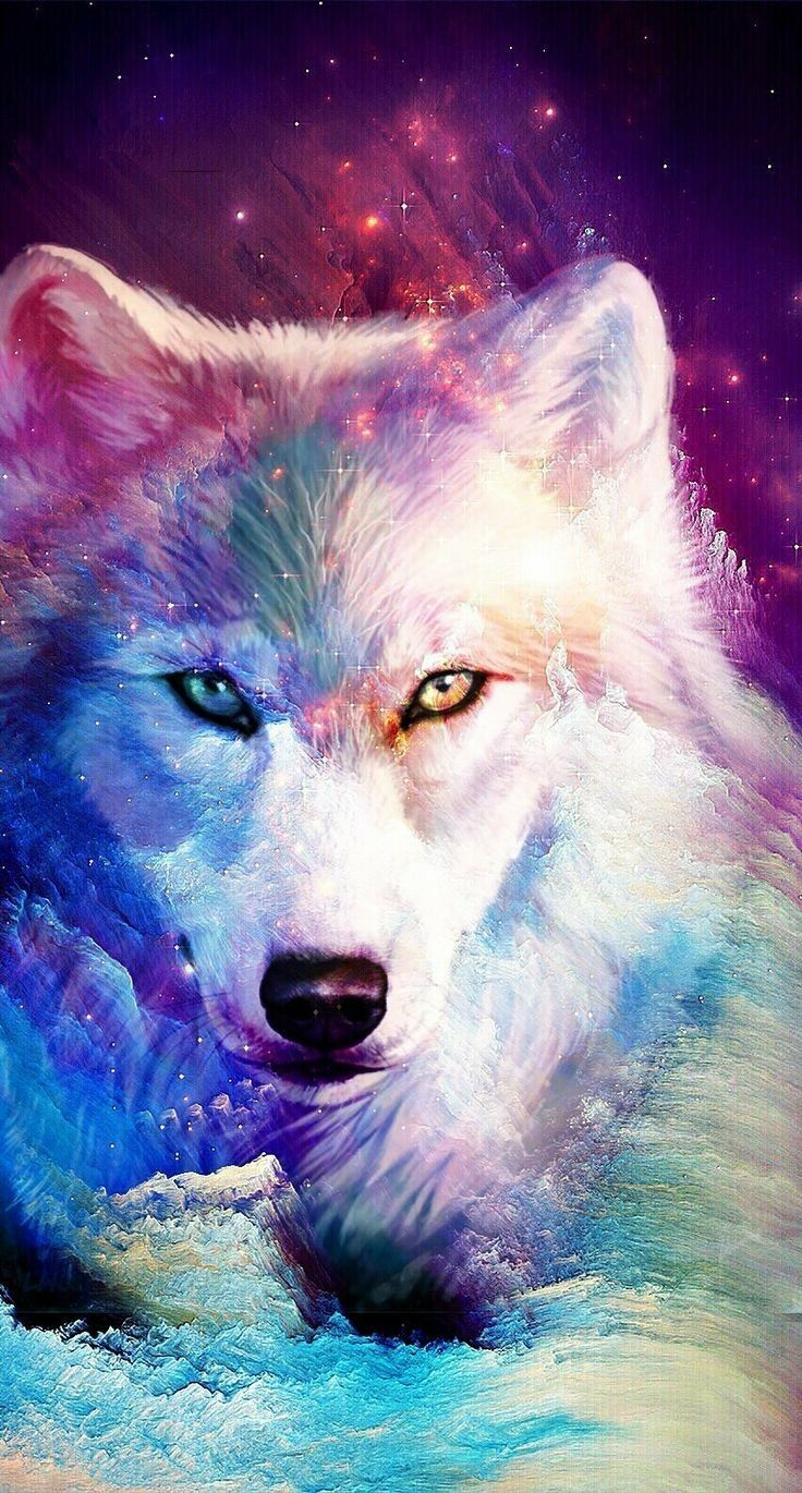 Rainbow Wolf Wallpapers Wallpaper Cave
