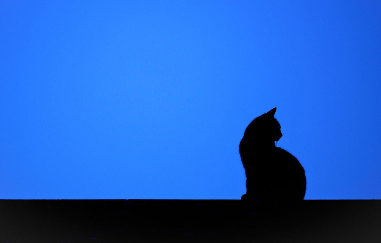 Black Cat Minimalist Wallpapers - Wallpaper Cave