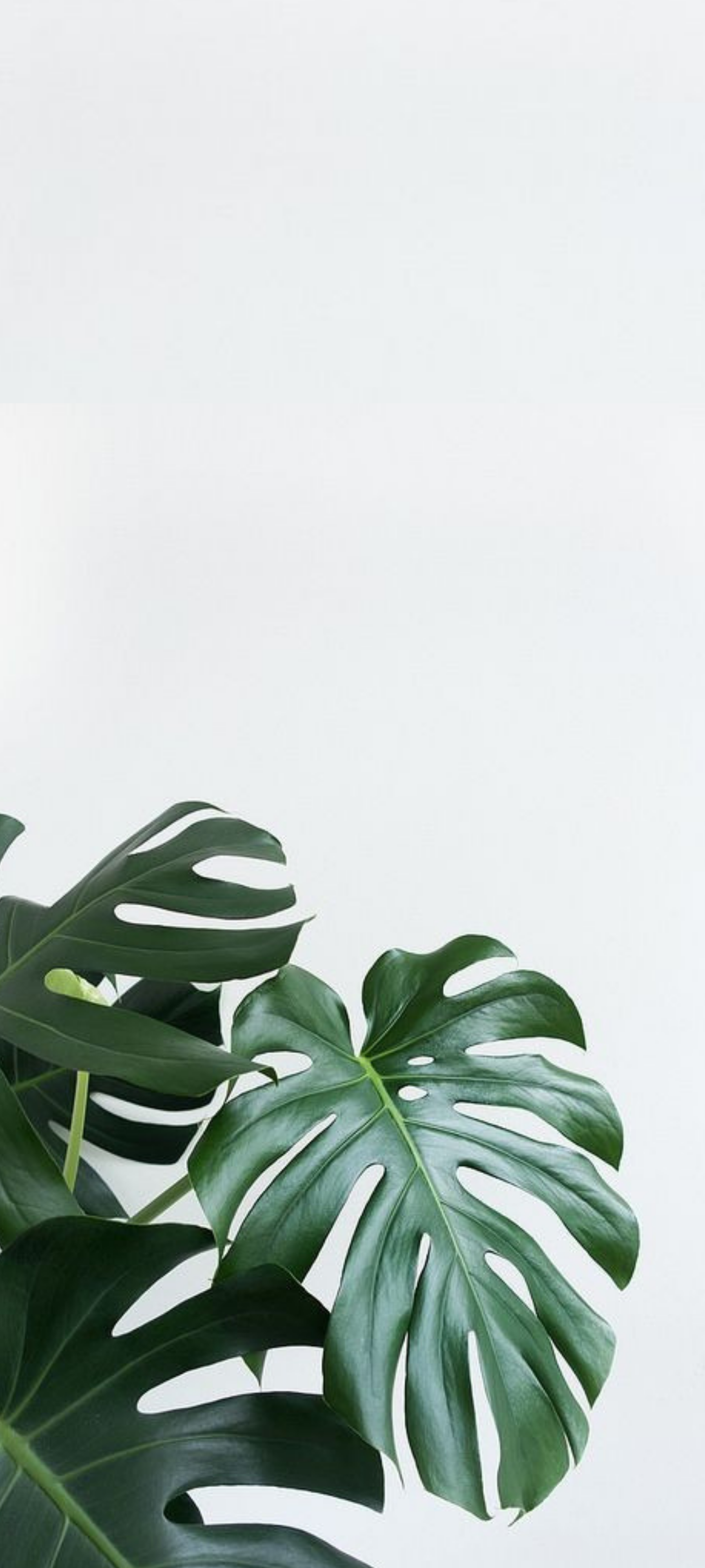 plant aesthetic hd wallpapers