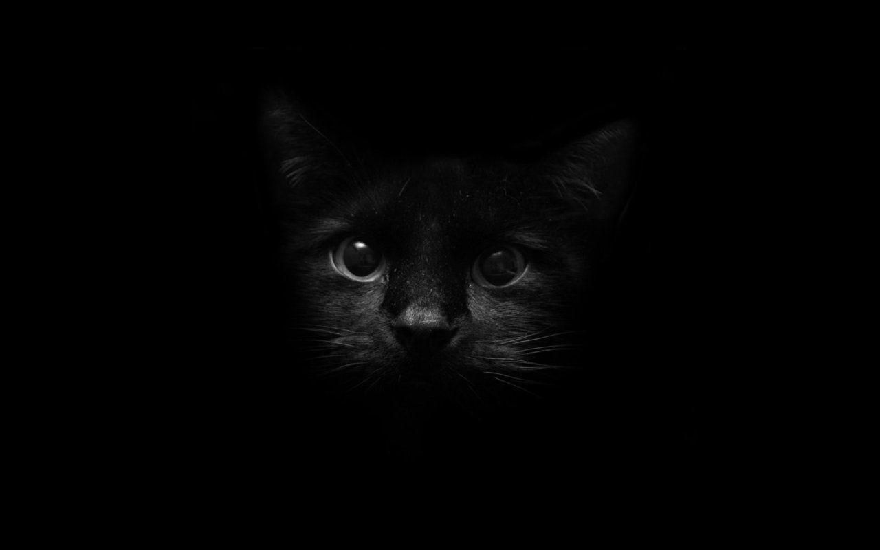 Black Kittens Wallpapers Wallpaper Cave