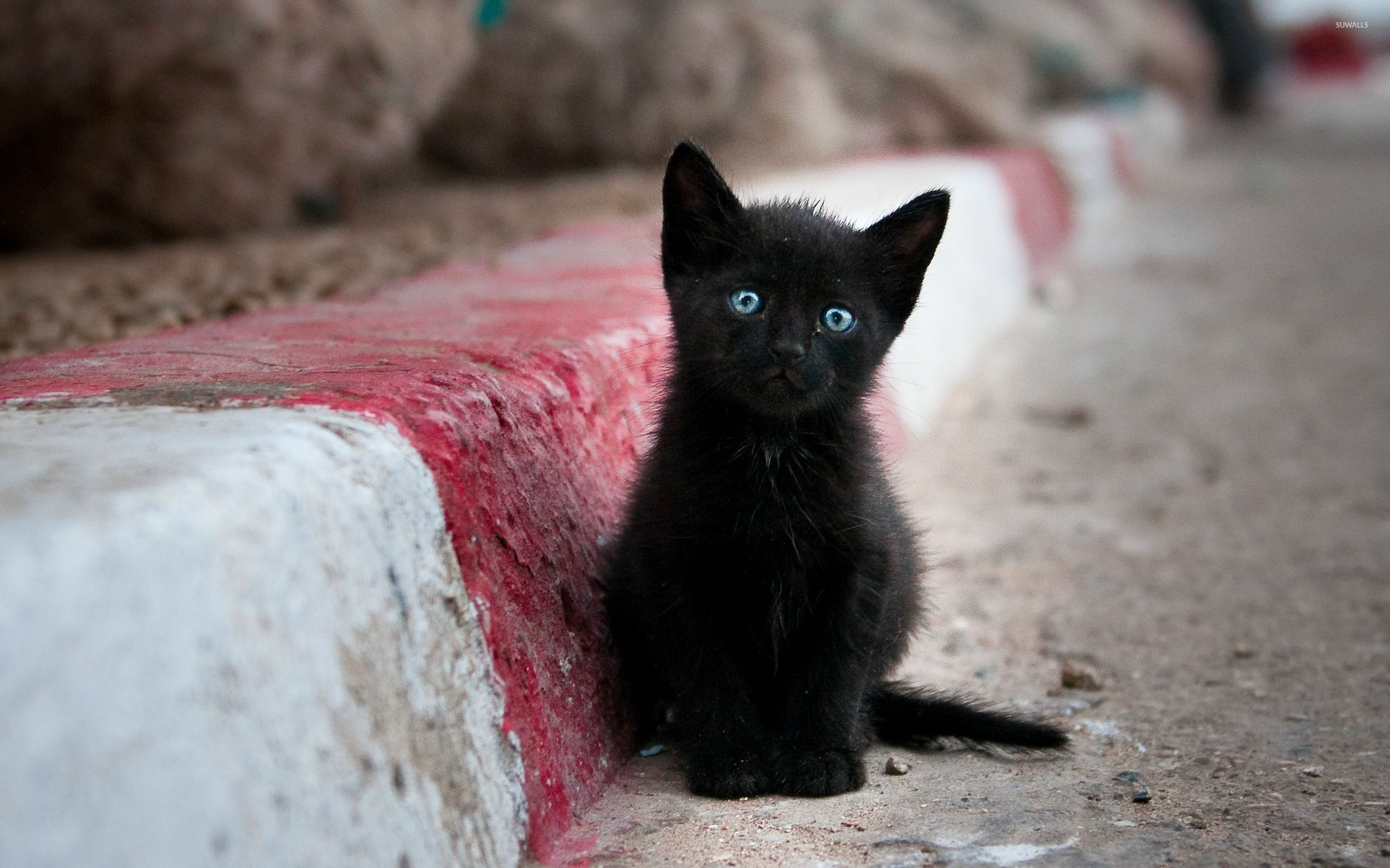 Black Kittens Wallpapers Wallpaper Cave
