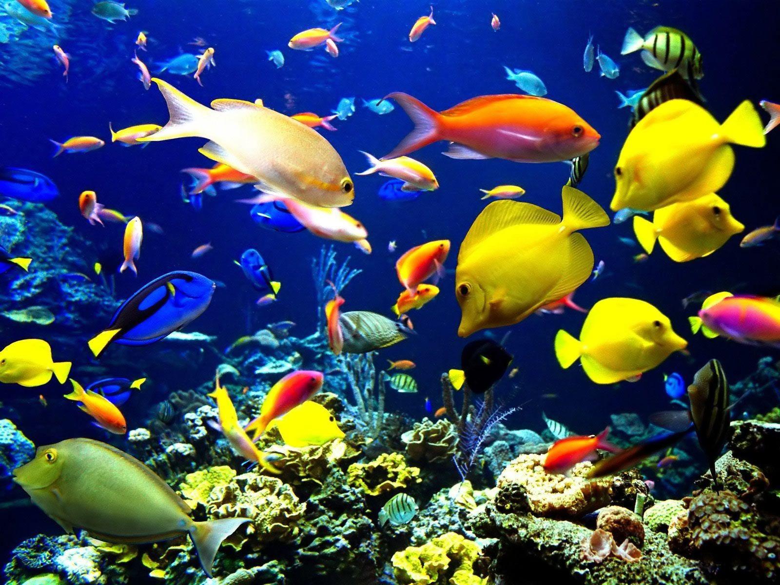 Live Fish Wallpapers   Wallpaper Cave