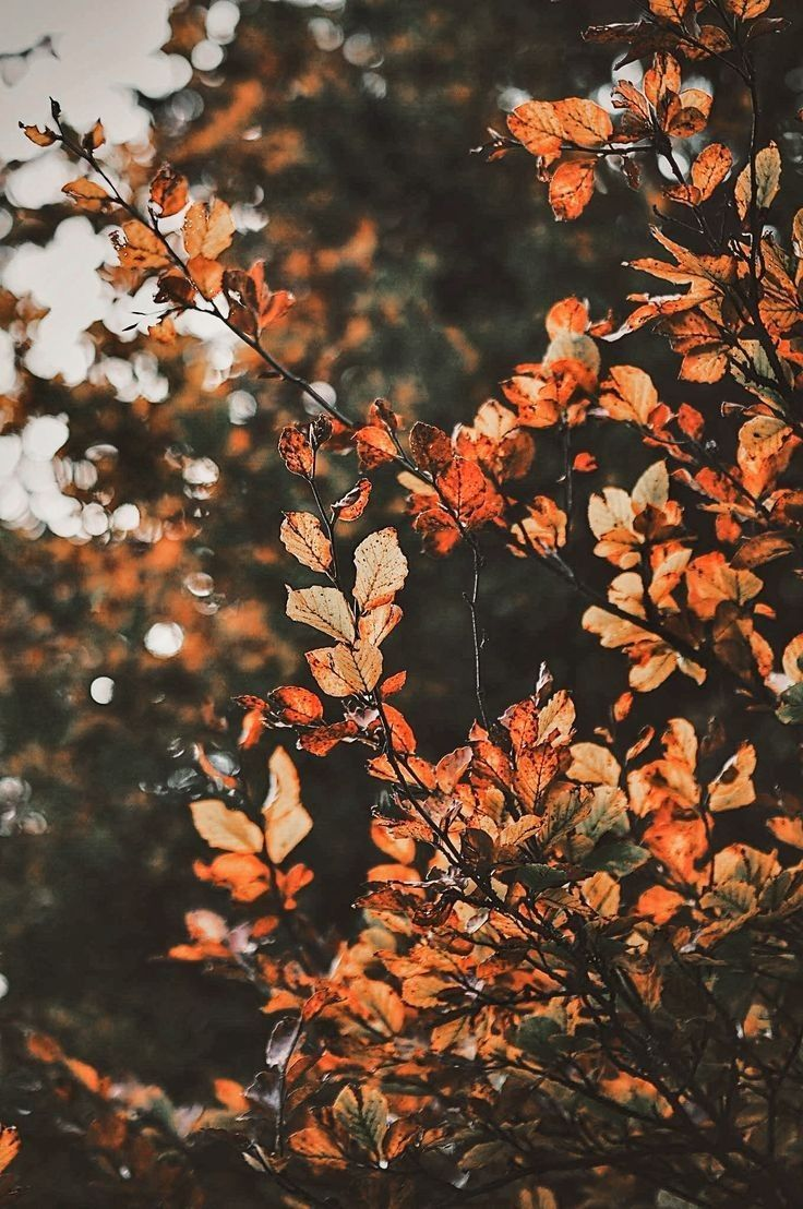 Cozy Autumn Aesthetic Wallpapers   Wallpaper Cave