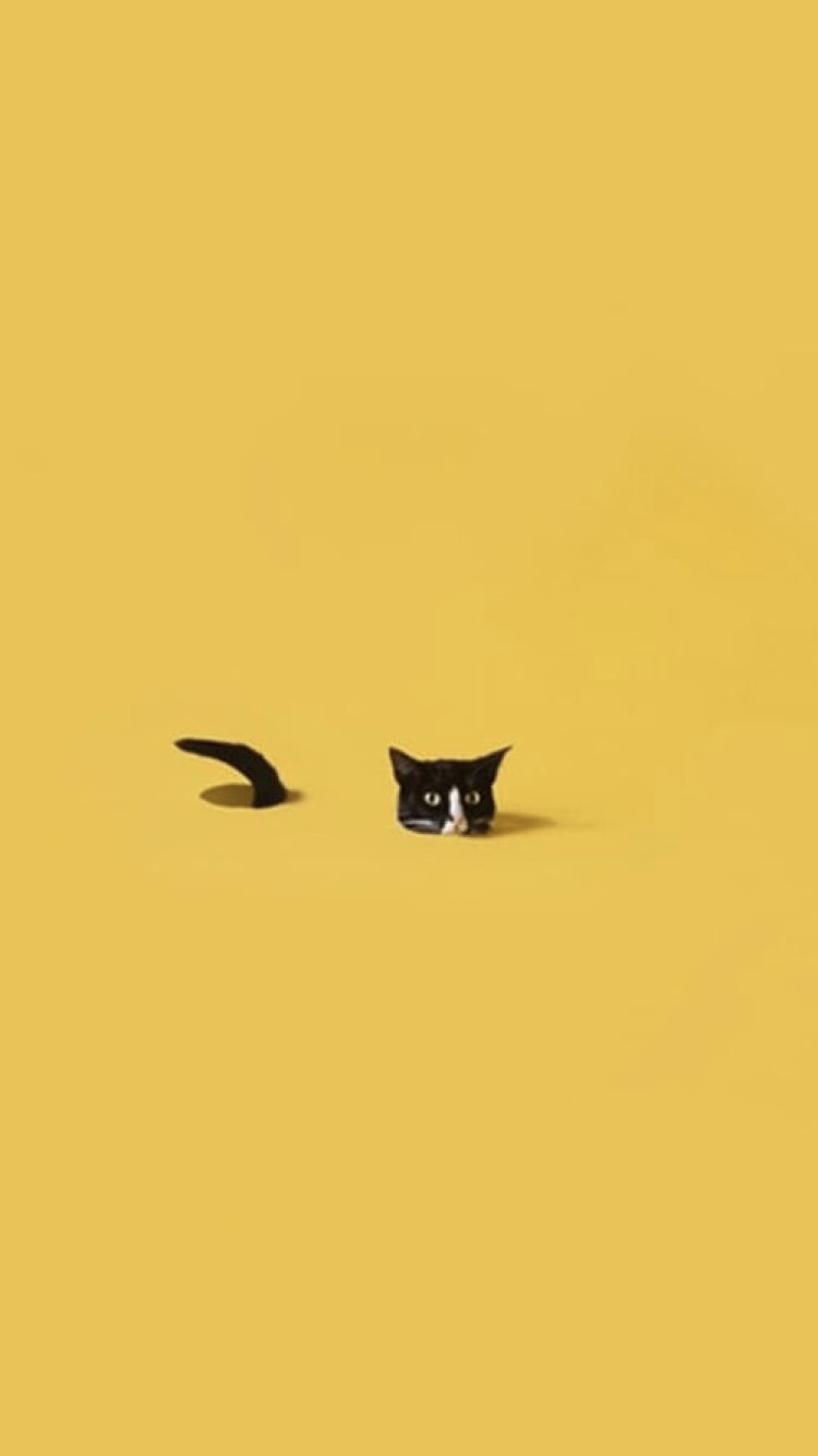 cat aesthetic wallpapers