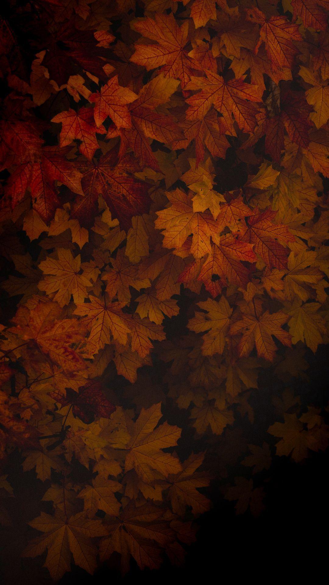 Autumn Portrait Wallpapers Wallpaper Cave