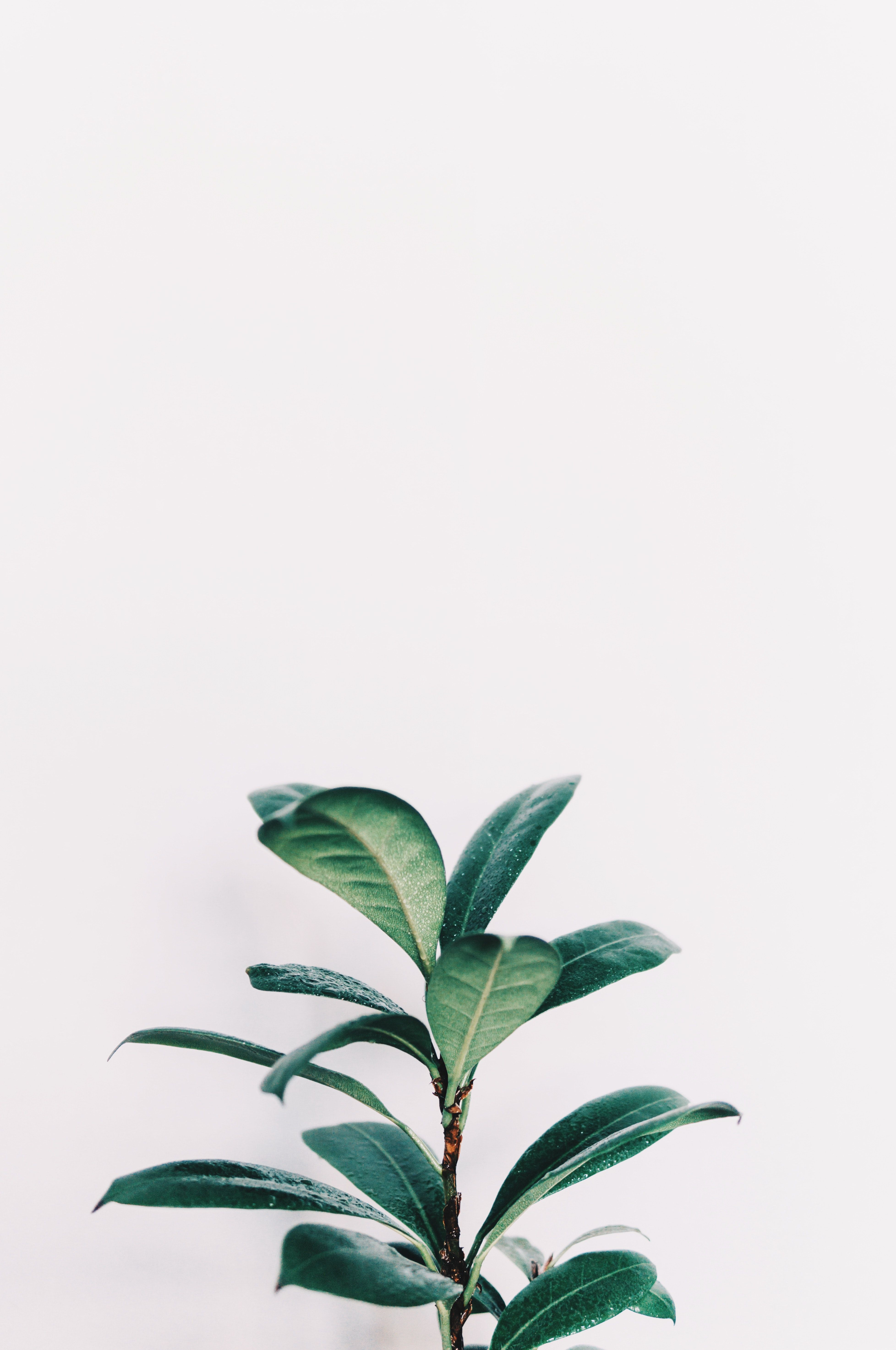 White Aesthetic Iphone Wallpapers Wallpaper Cave