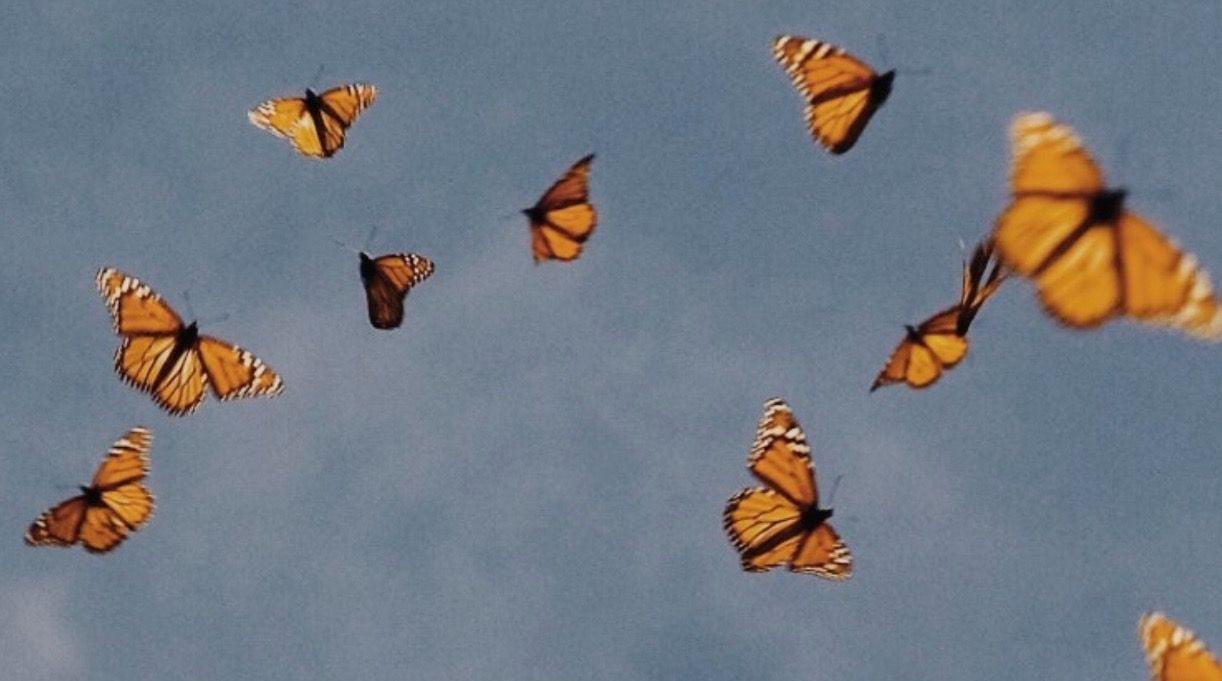 Aesthetic Butterfly Desktop Wallpapers Wallpaper Cave